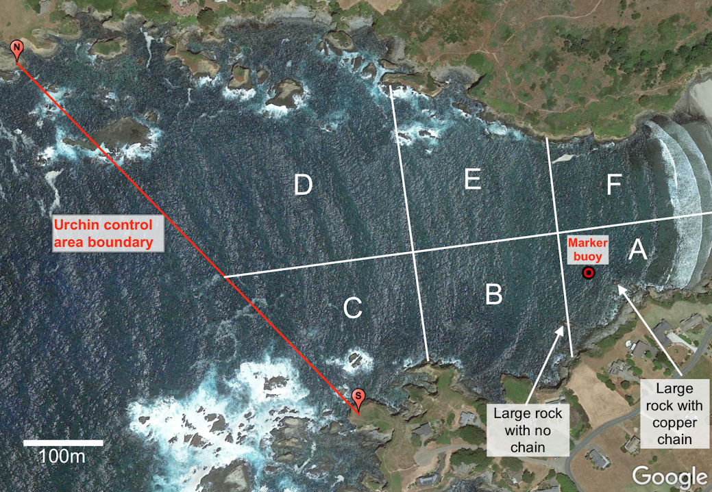 Map of legal urchin culling area in Caspar Cove, California. Divers should focus on areas A–C.  Credit: Joe Tyburczy, CASG