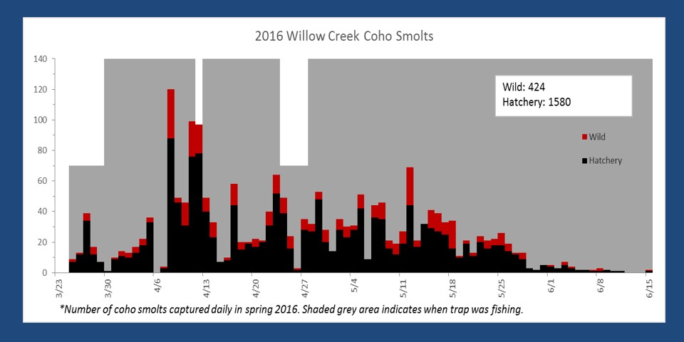 Number of smolts captured in the Willow Creek smolt trap in spring 2016