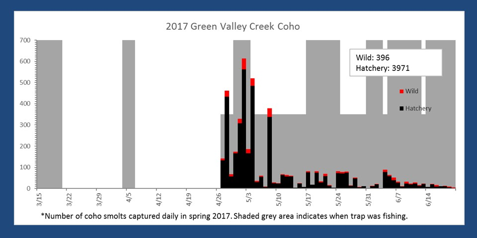 Number of smolts captured in the Green Valley Creek smolt trap in spring 2017