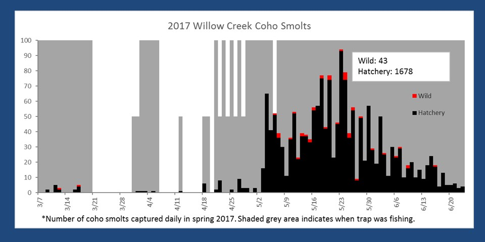 Number of smolts captured in the Willow Creek smolt trap in spring 2017