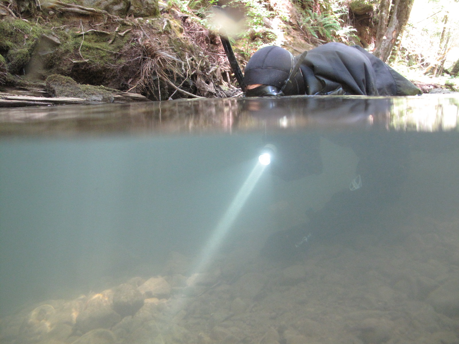 California Sea Grant biologist Will Boucher searches for fish to identify and count during a snorkel survey.