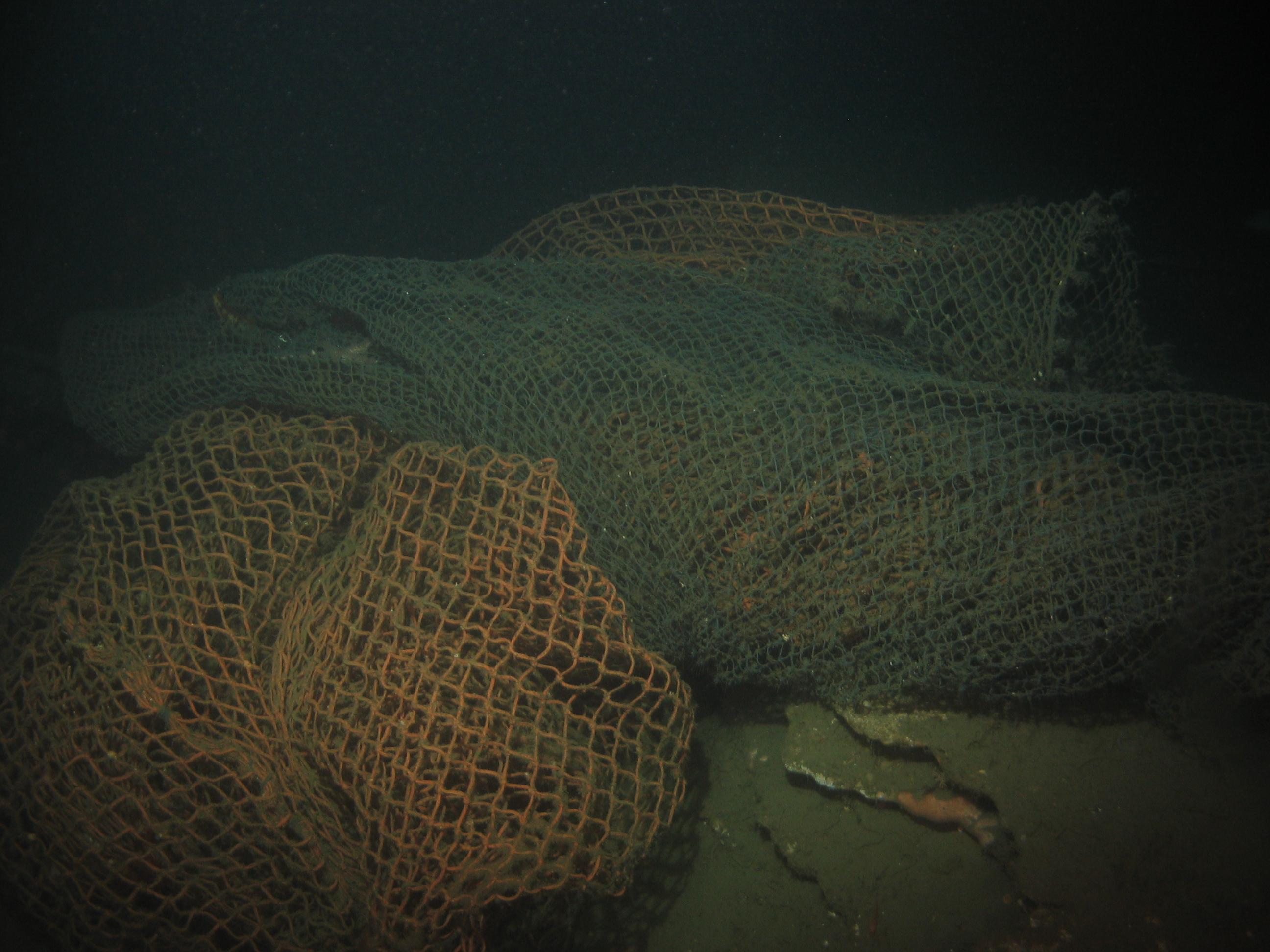 A large abandoned seine net was found off of Portuguese Ledge SMCA.
