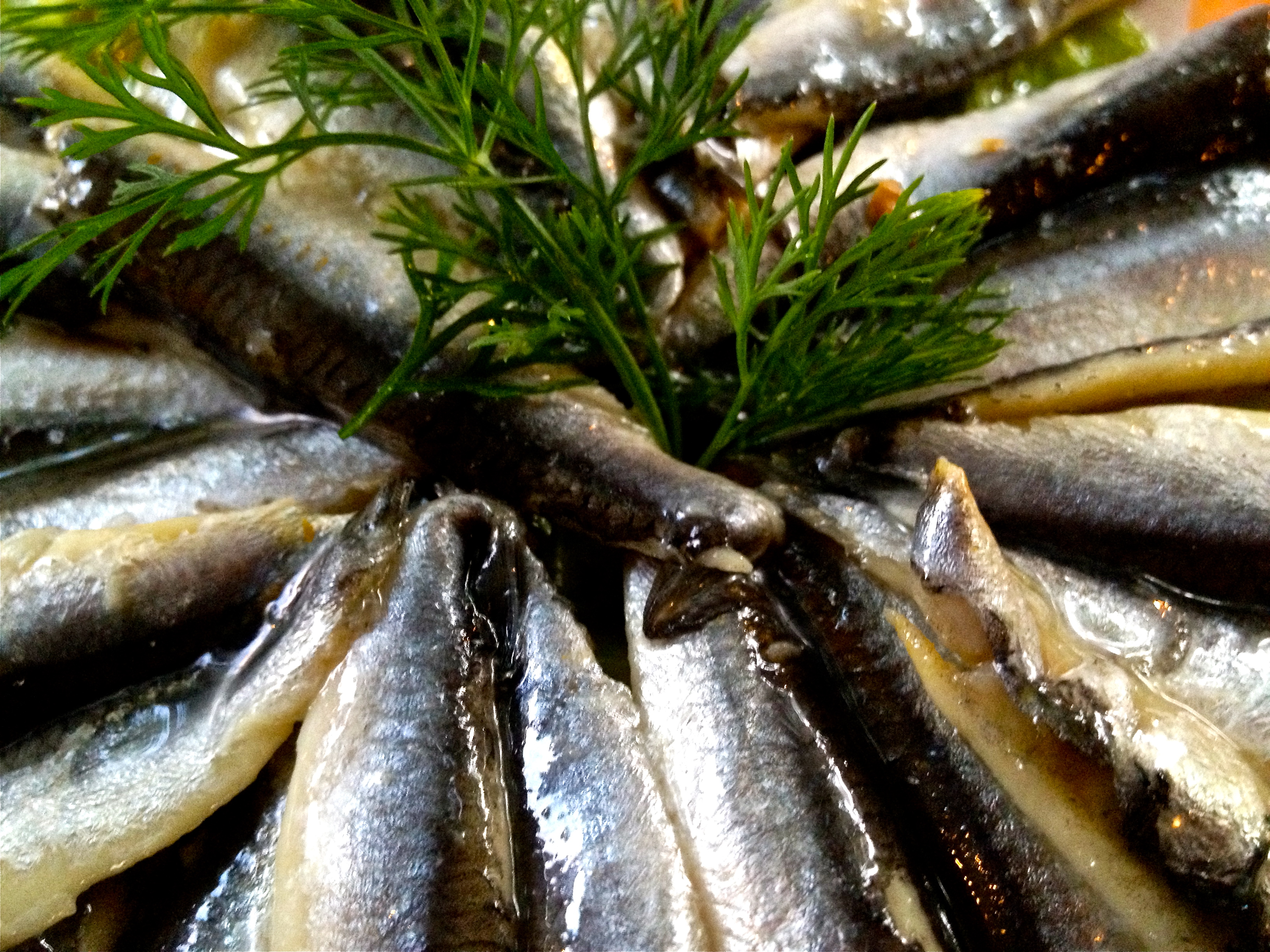 anchovies in oil with dill garnish