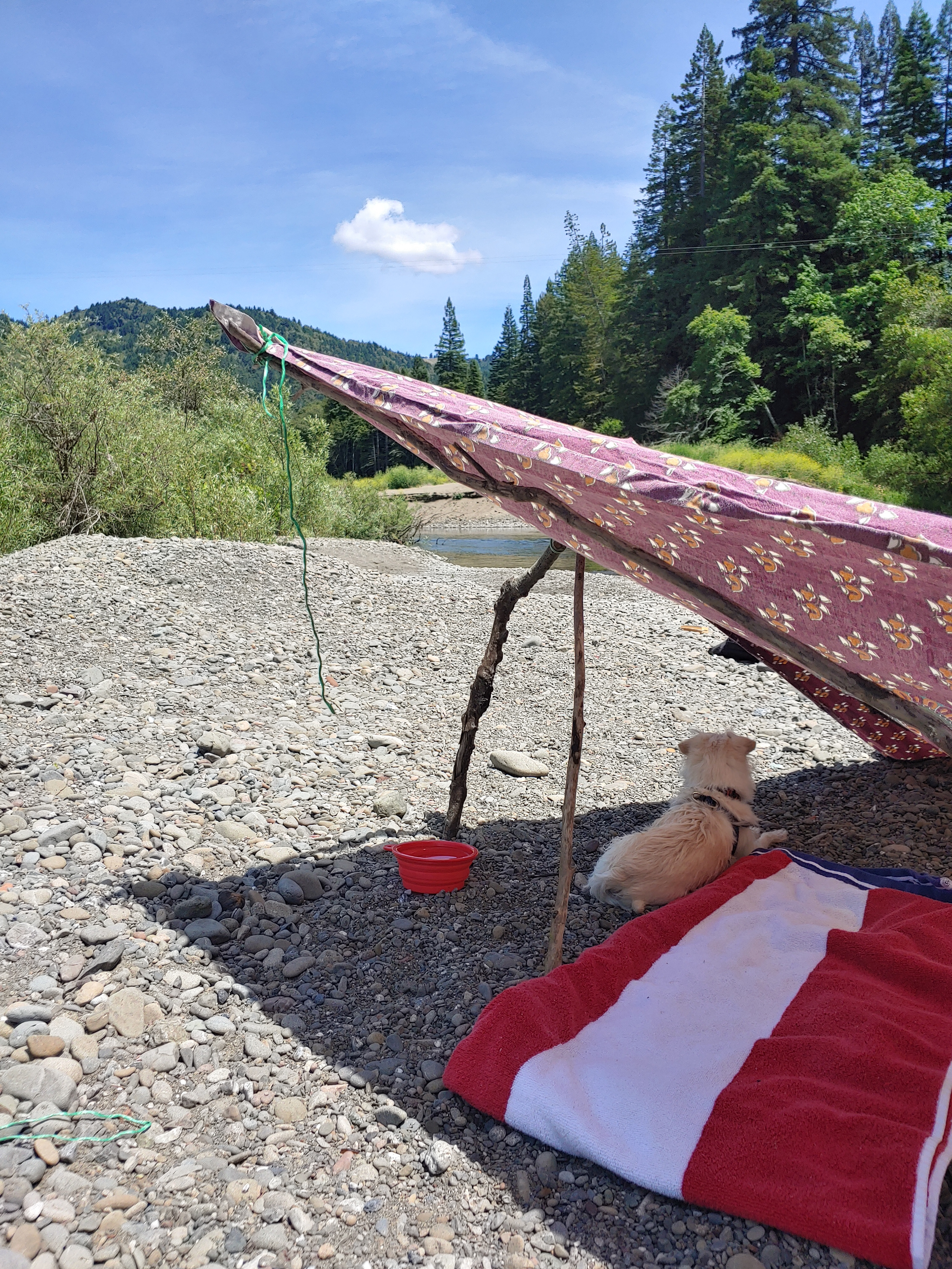 dog sitting under a shade cover on a river bank