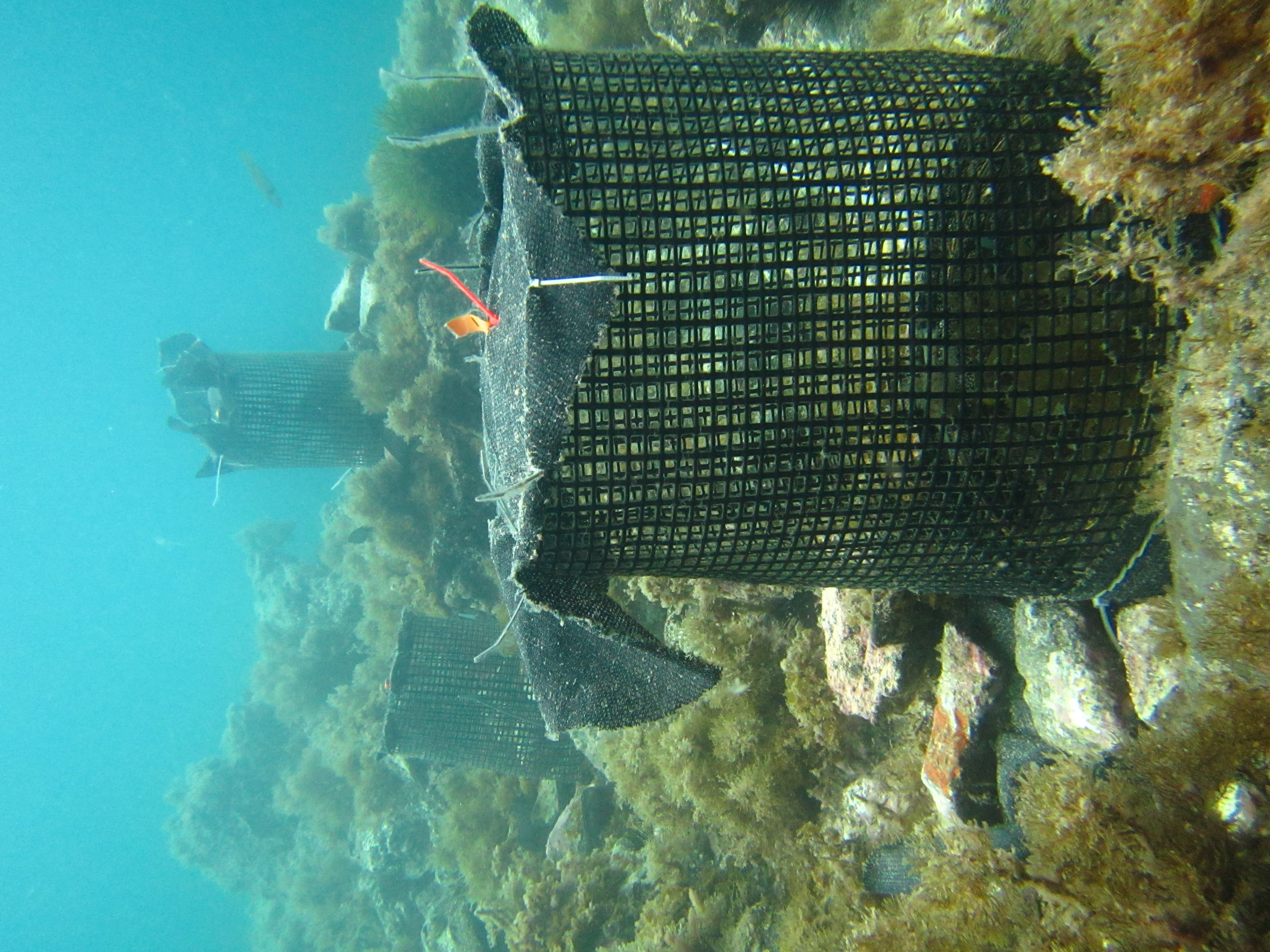 underwater cages with algae on a rocky reef