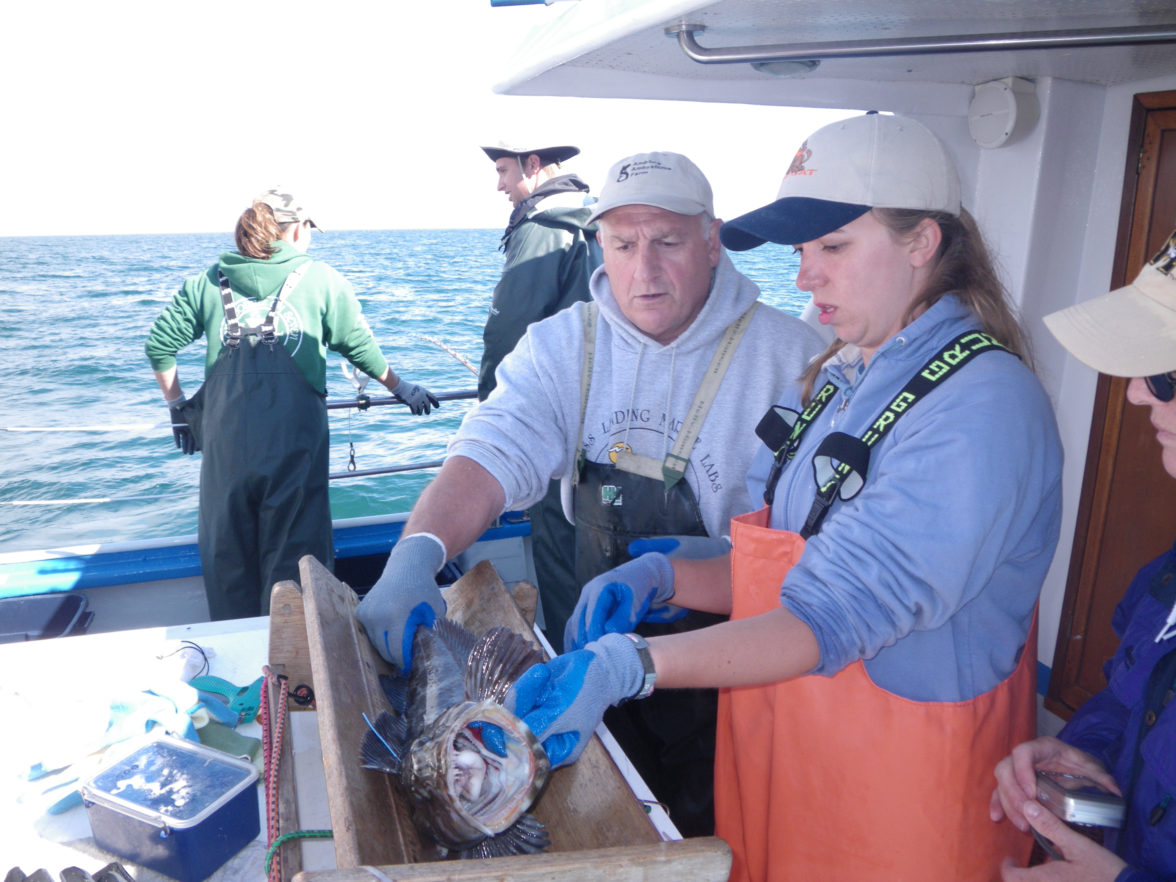 Rick Starr and Andrea Launer identifying the sex of a tagged lingcod.