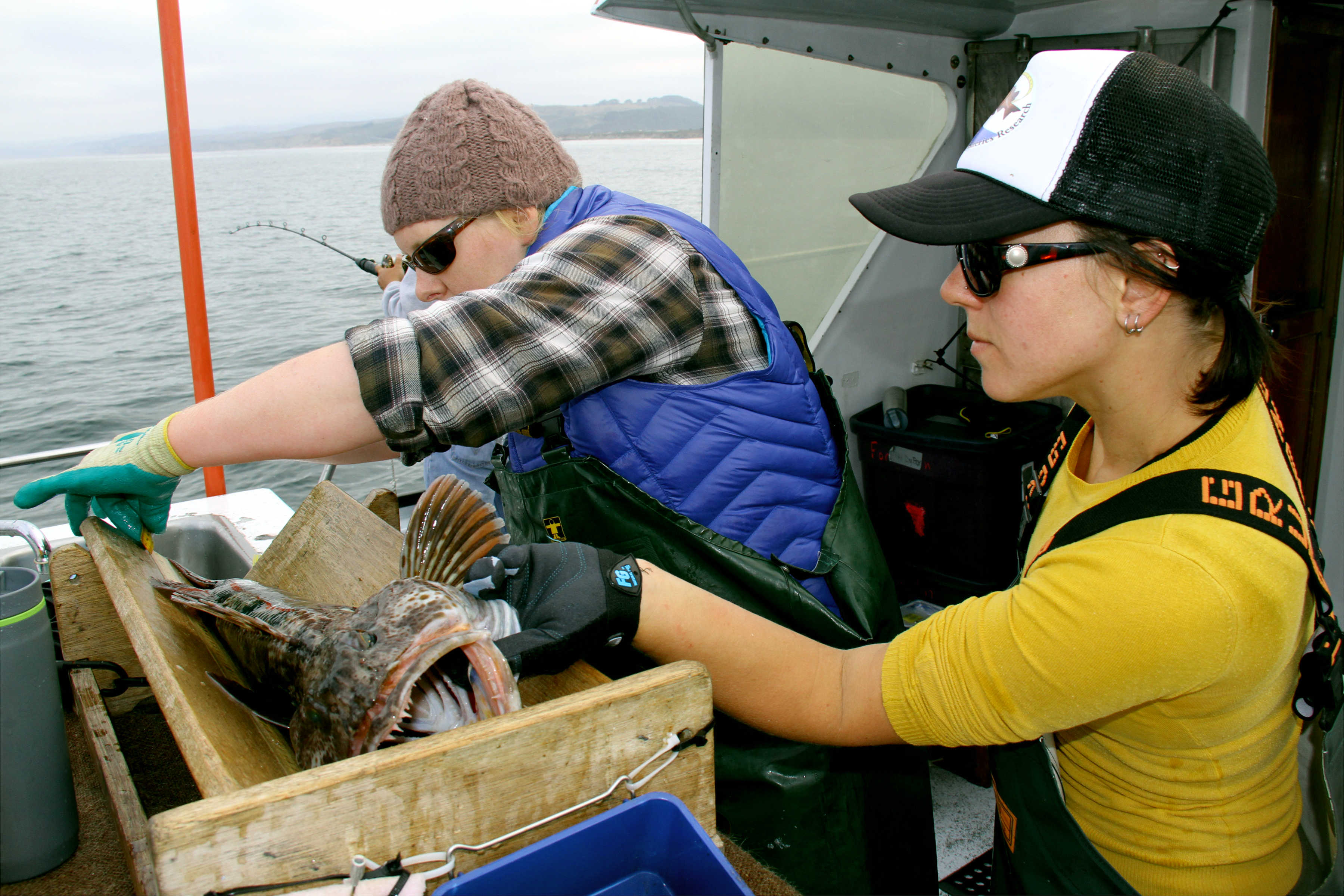 Katie Schmidt and Cheryl Barnes measuring a lingcod.