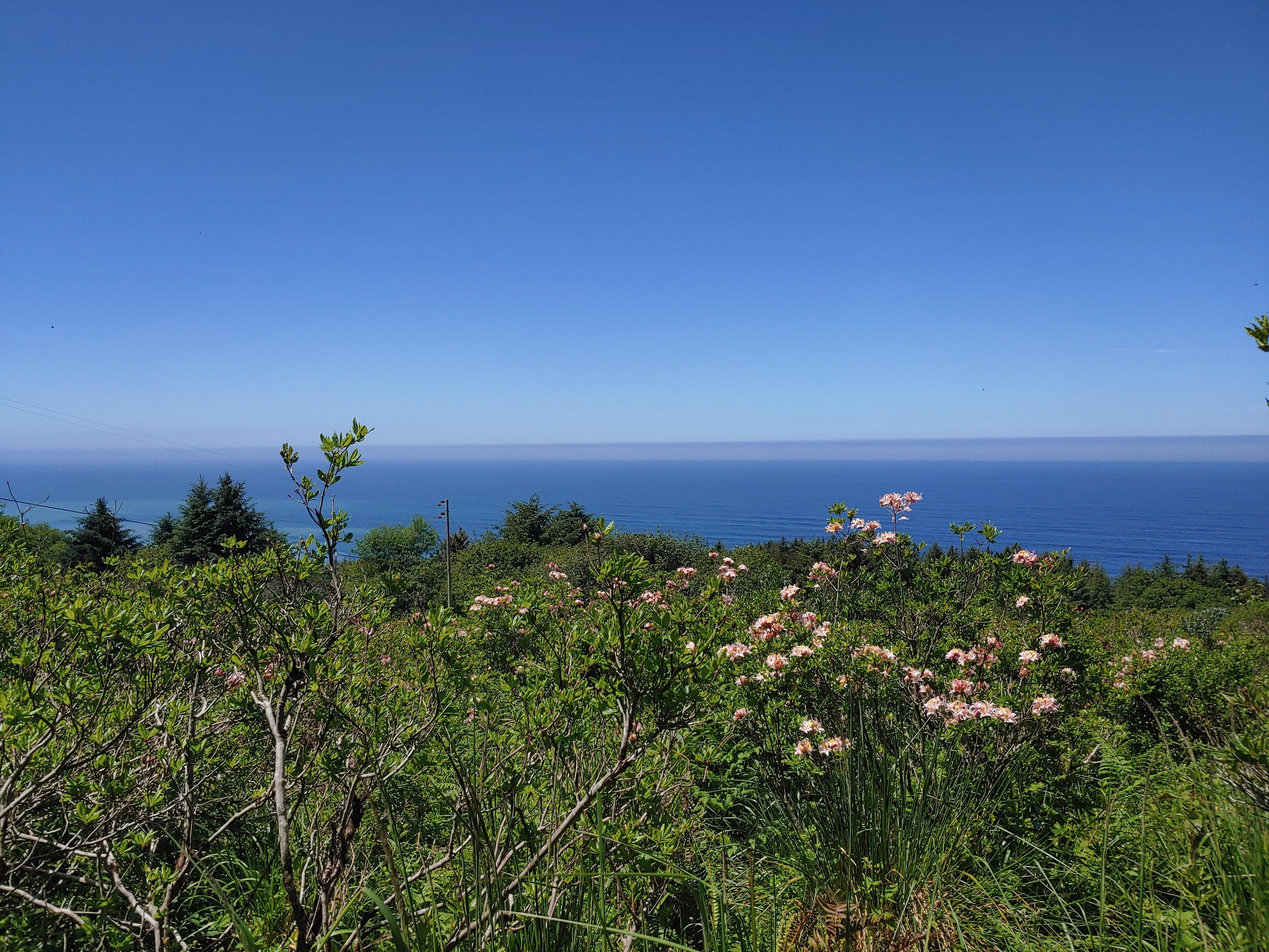 open hillside with an ocean view
