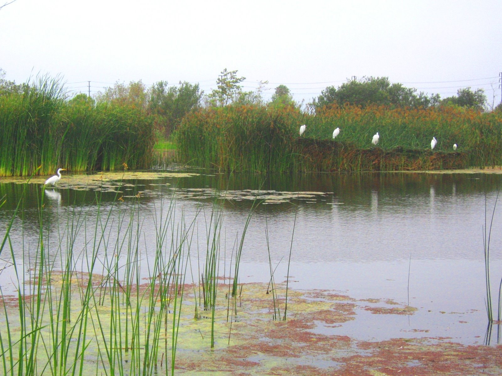 Ballona Wetlands. Image courtesy of Southern California Wetlands Recovery Project (WRP)
