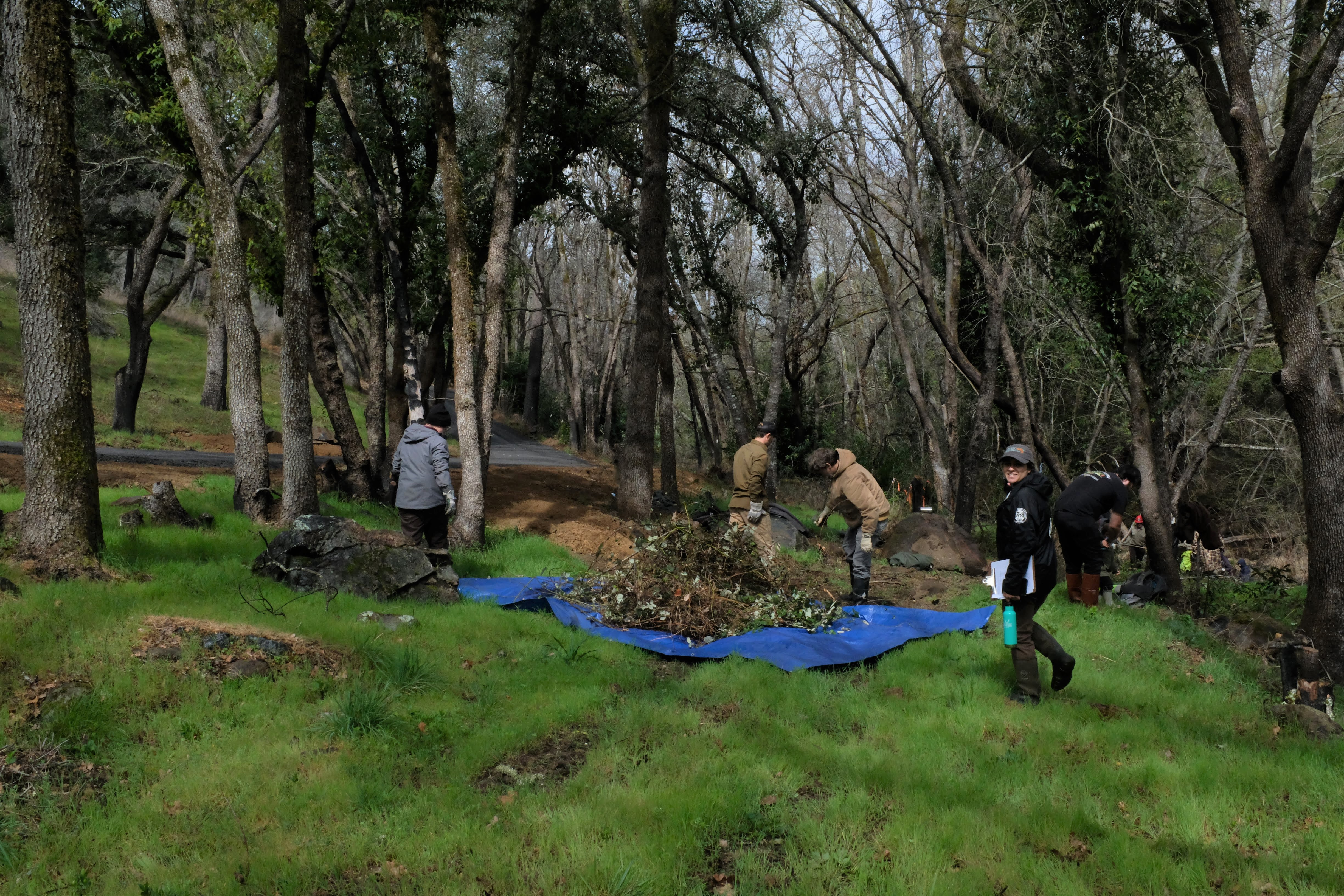 Invasive Himalayan blackberry plants are pulled and moved to the burn pile