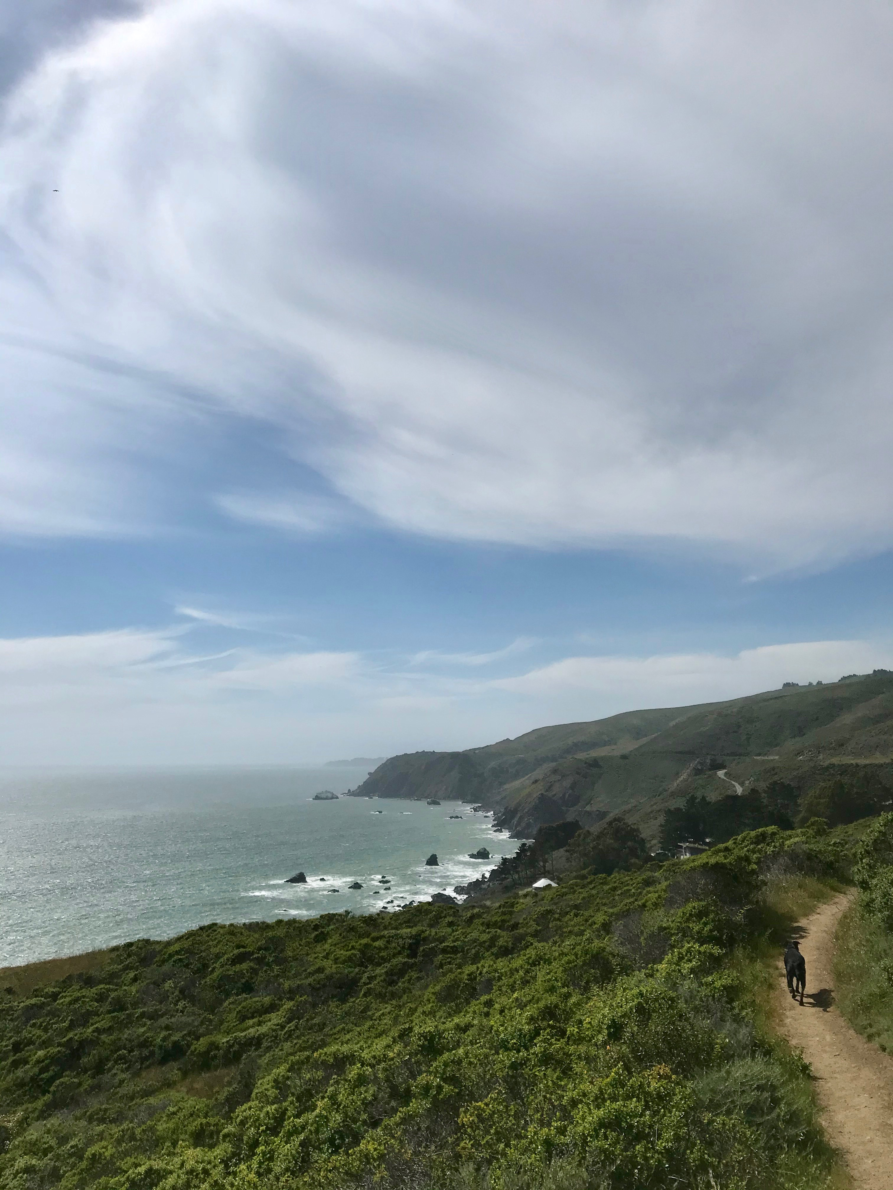 Dog walking along a trail by the ocean