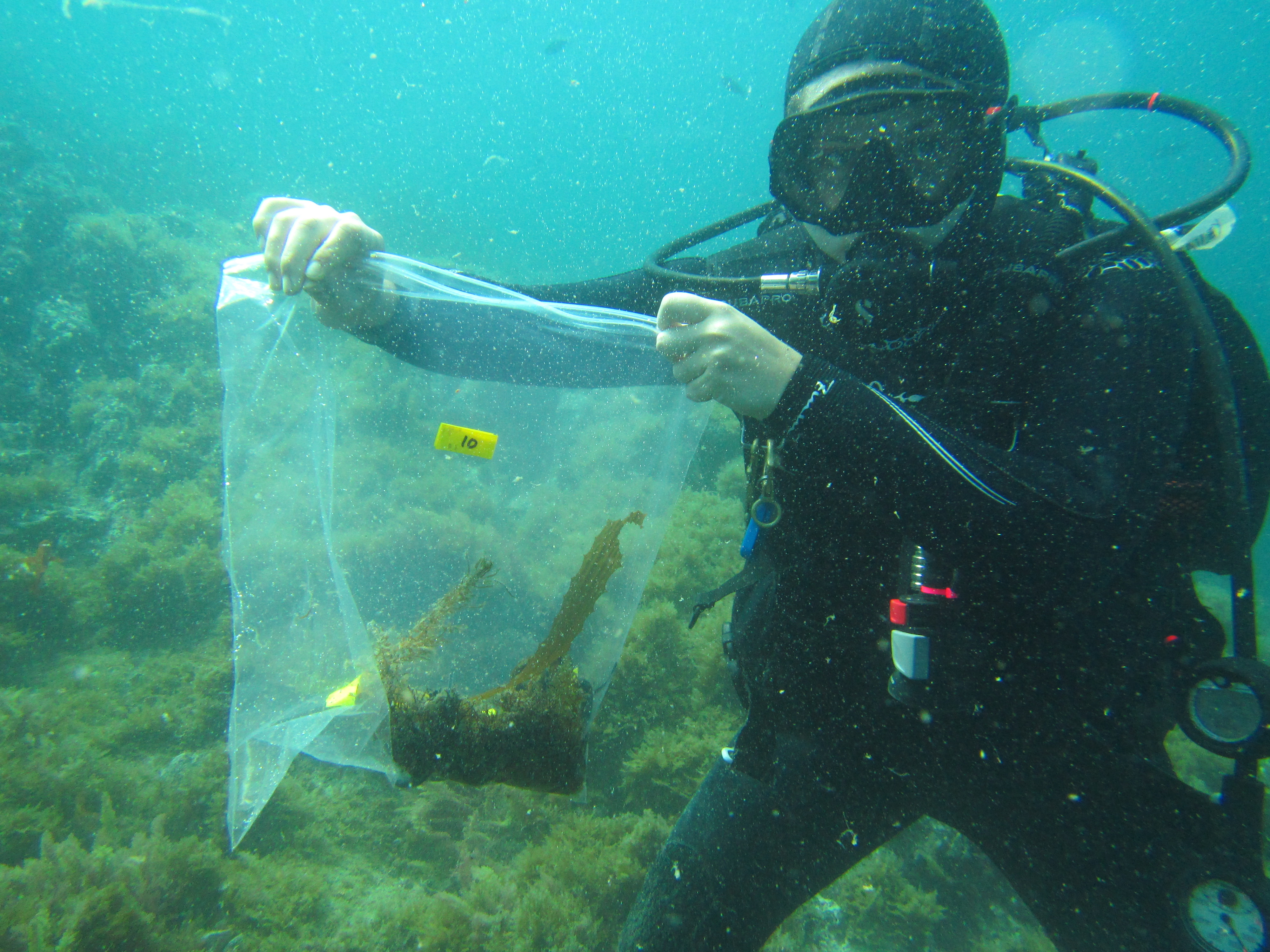 scuba diver holding up a plastic bag filled with seaweed samples