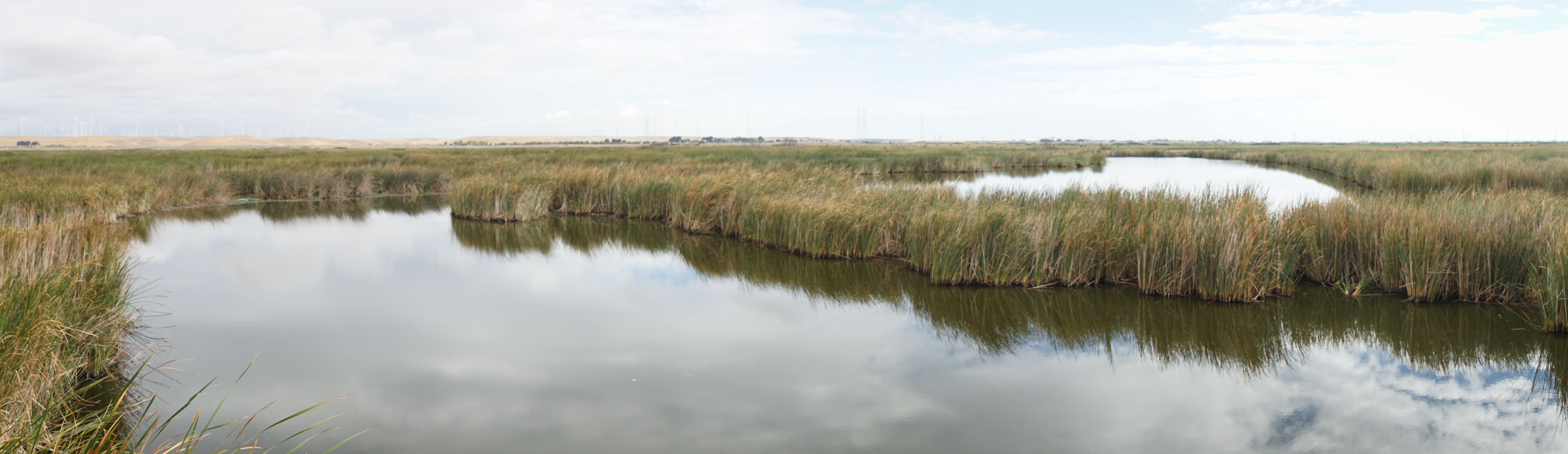 Restored wetlands in the Sacramento-San Joaquin Delta could help reduce greenhouse gas emissions compared to current land uses, and could also have a local cooling effect. Credit: Kyle Hemes
