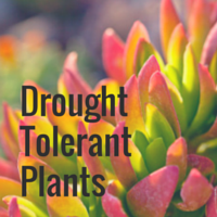 Green Gardening Sheet - Drought Tolerant Plants