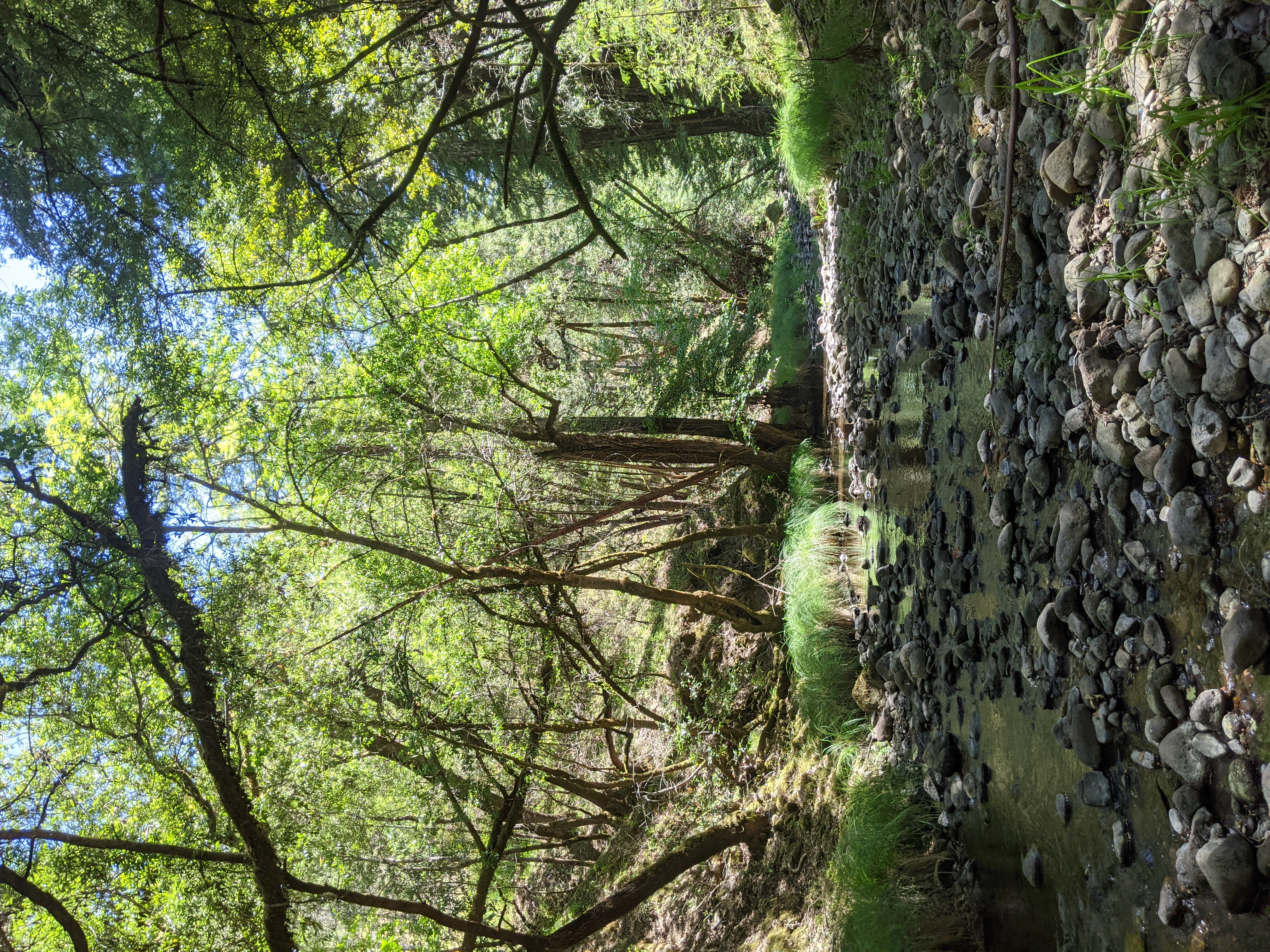 Drying stream in the Russian River watershed.