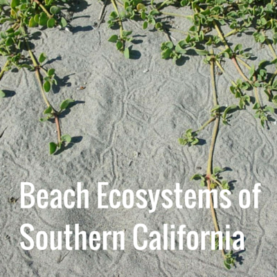 Explore Beach Ecosystems of Southern California