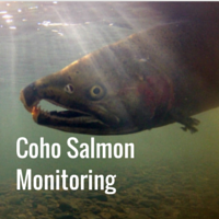 Coho Salmon Monitoring