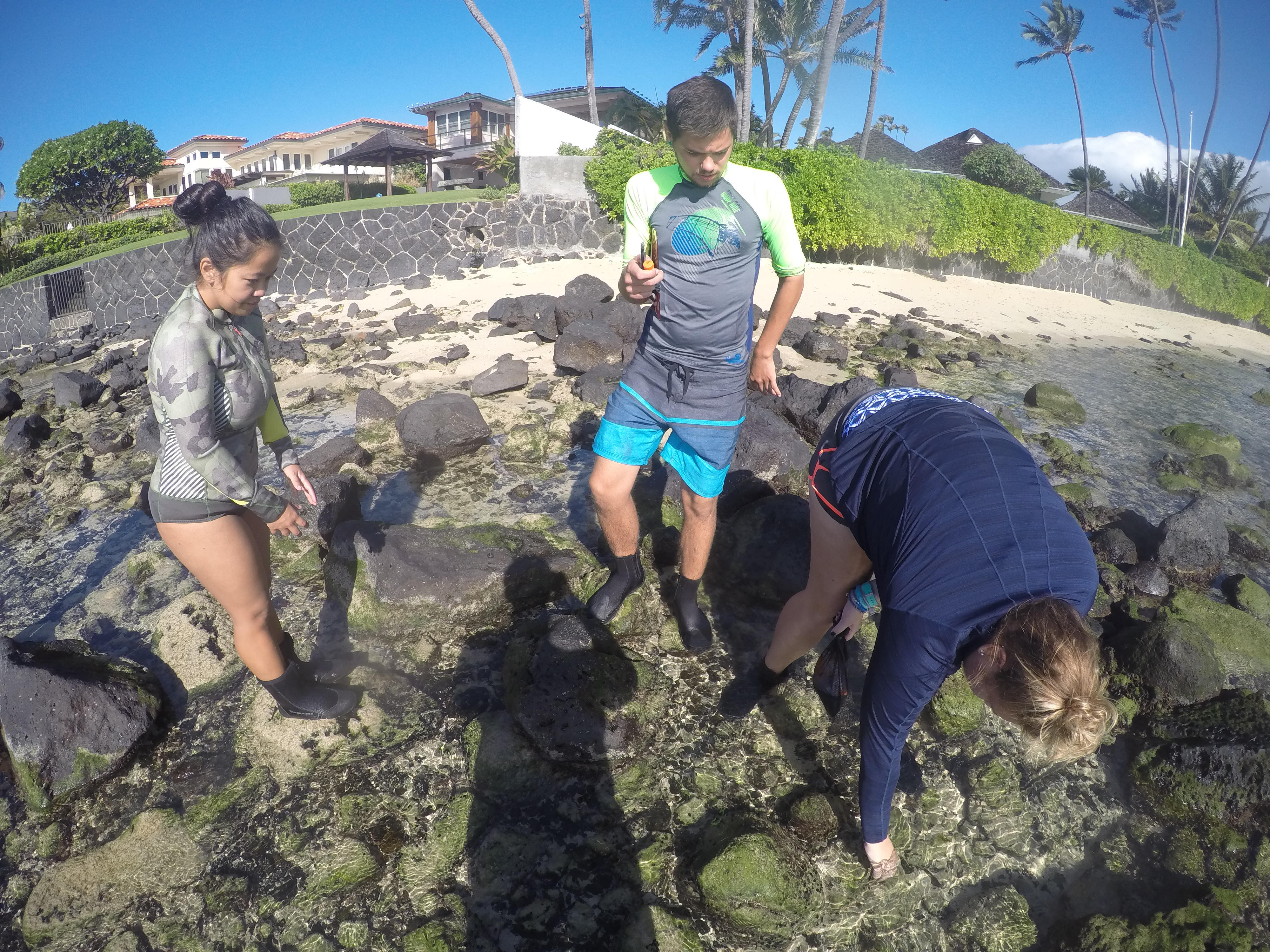 Flo in the field with undergraduate students studying Hawai'i's intertidal zone for the community science project and intertidal ecology project OPIHI