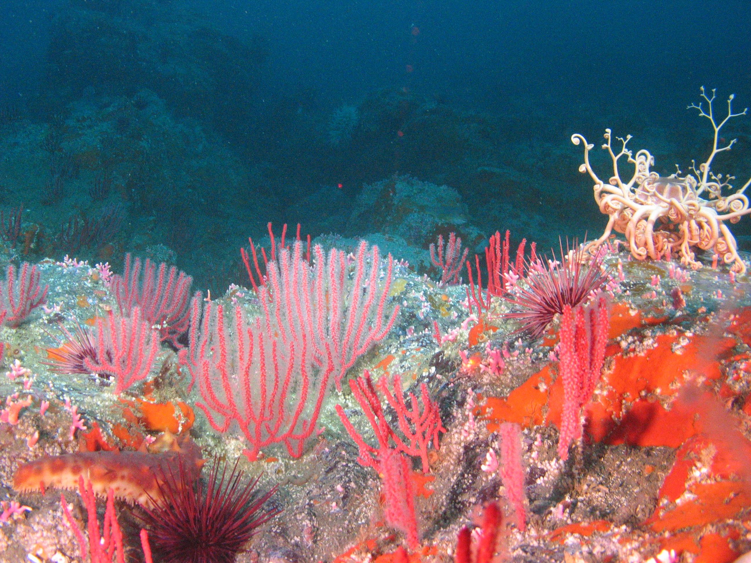 Colorful invertebrates cover a rocky habitat Inside Sea Lion Gulch SMR.