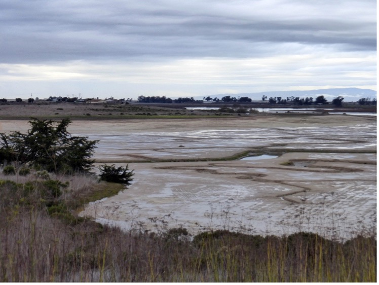 marsh with tidal channels.