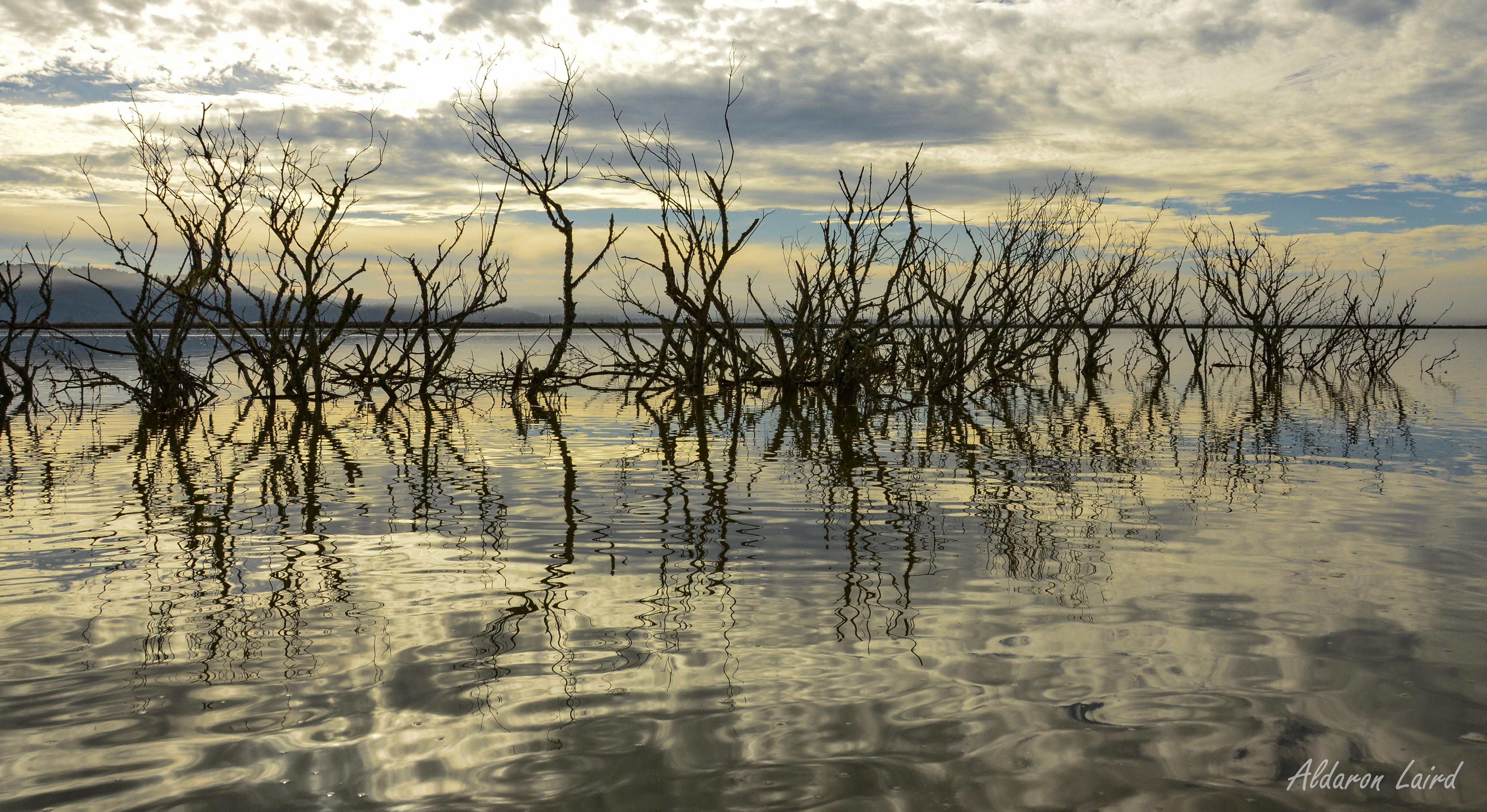 Humboldt Bay King Tide, Daniel Slough.