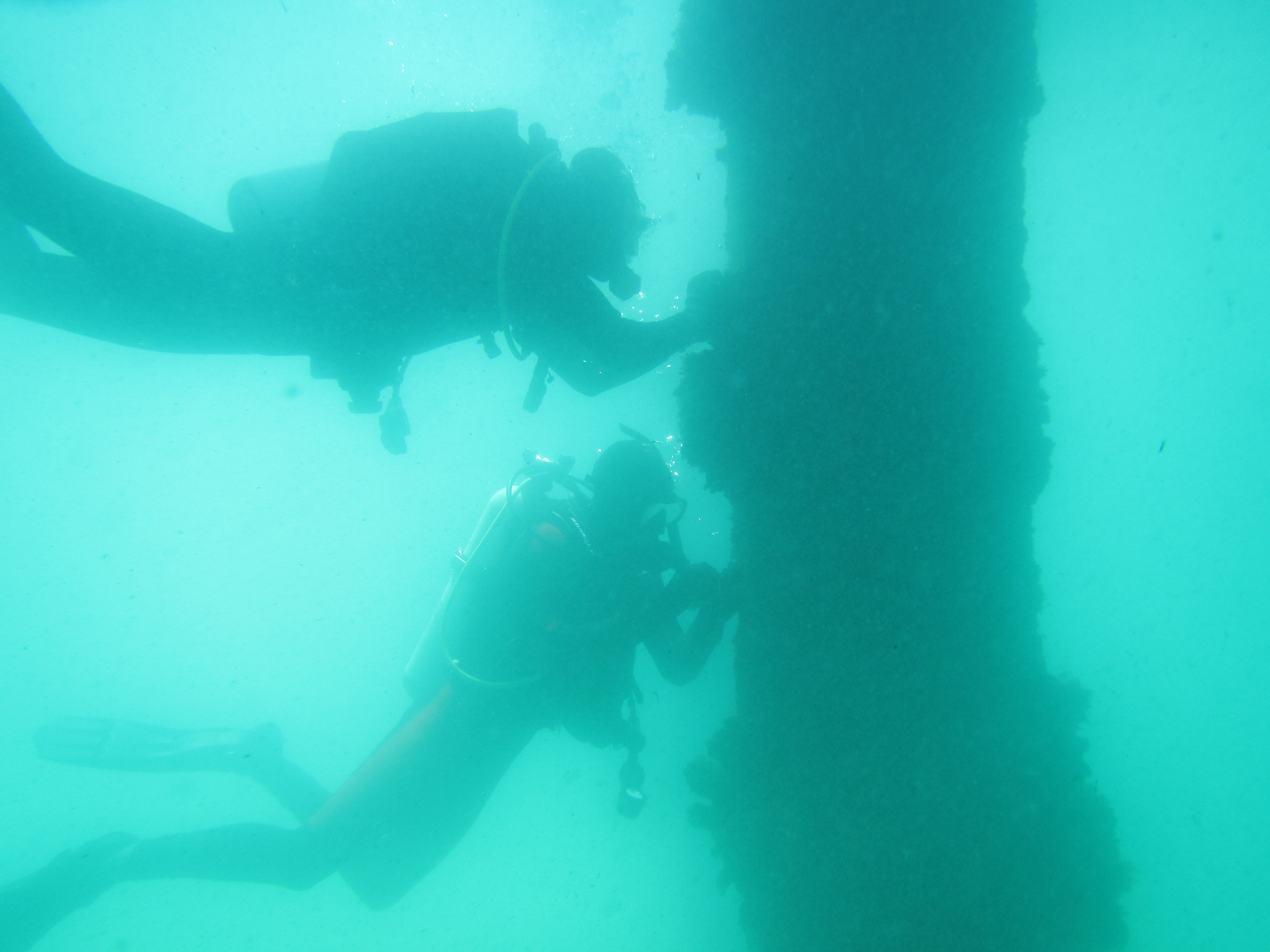 divers at Pier