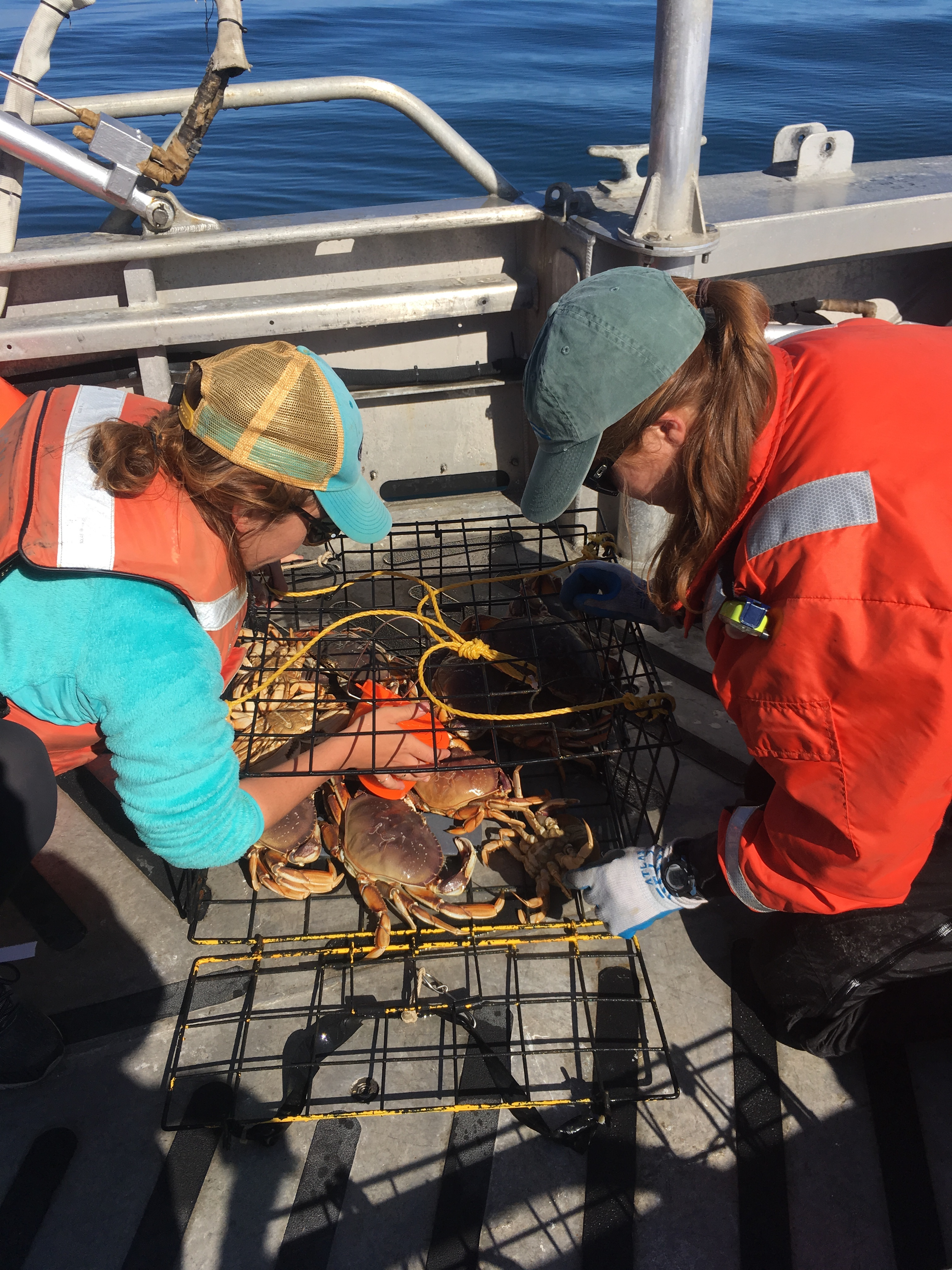 researchers collecting crabs.