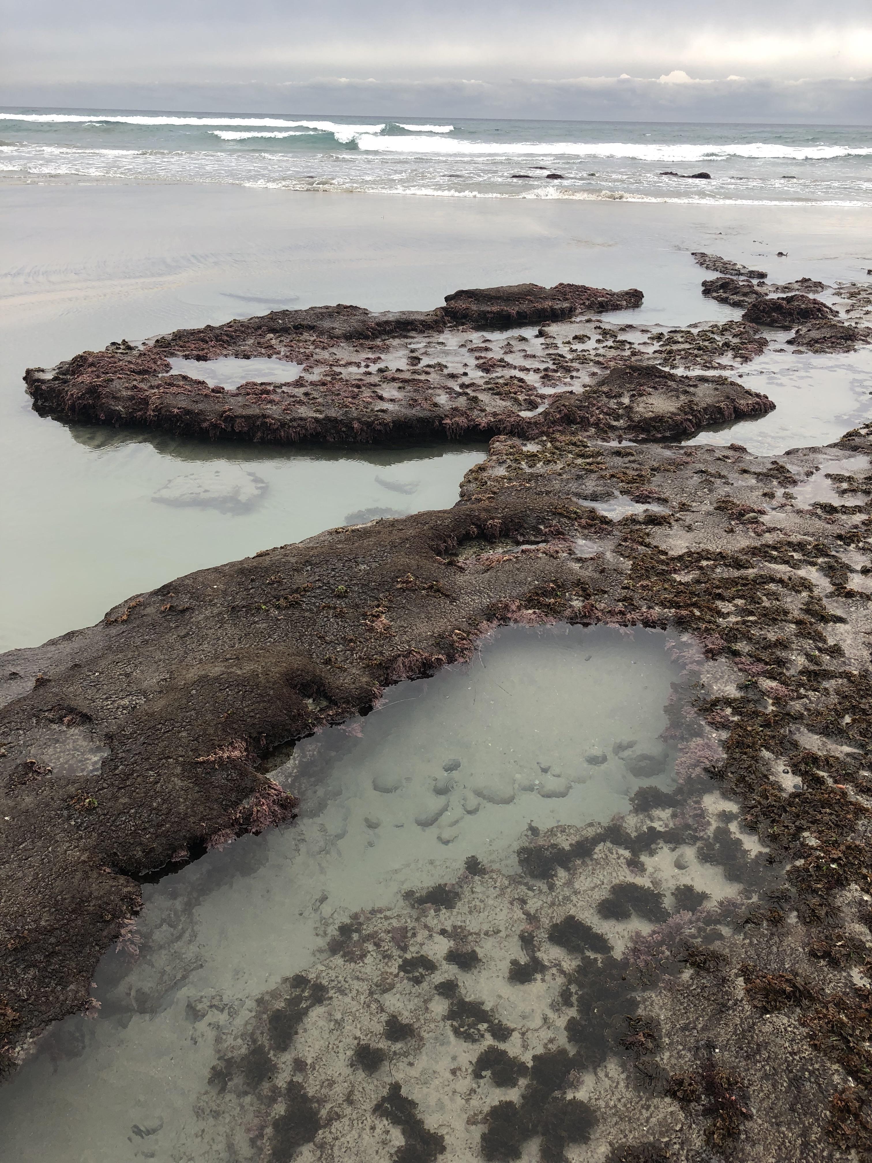 Arrecife en San Diego durante marea baja (Foto: Nick Sadrpour)