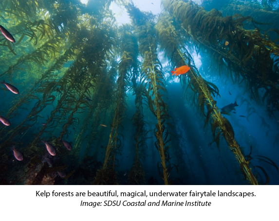 California Kelp Forest