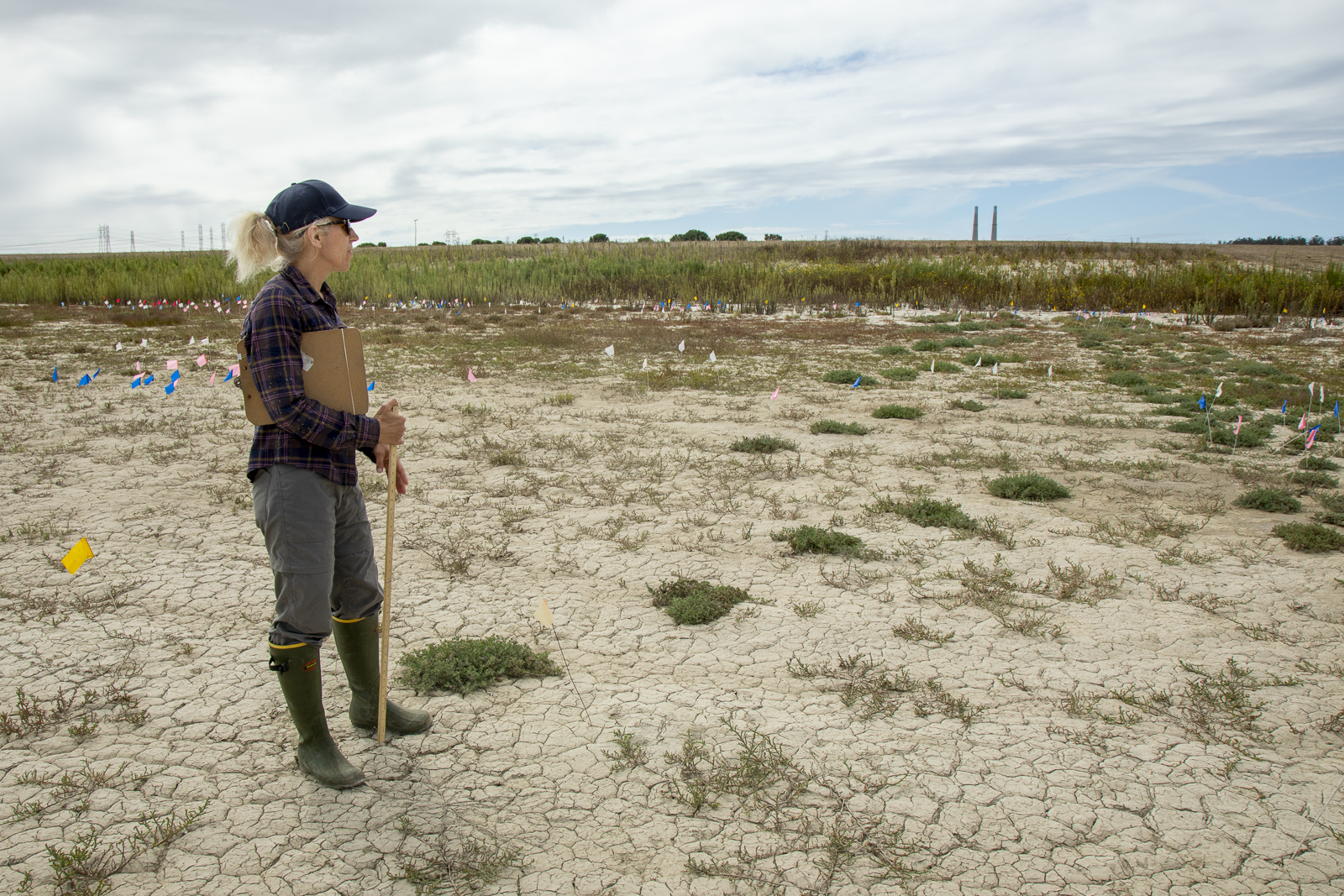 woman surveys a dry marsh