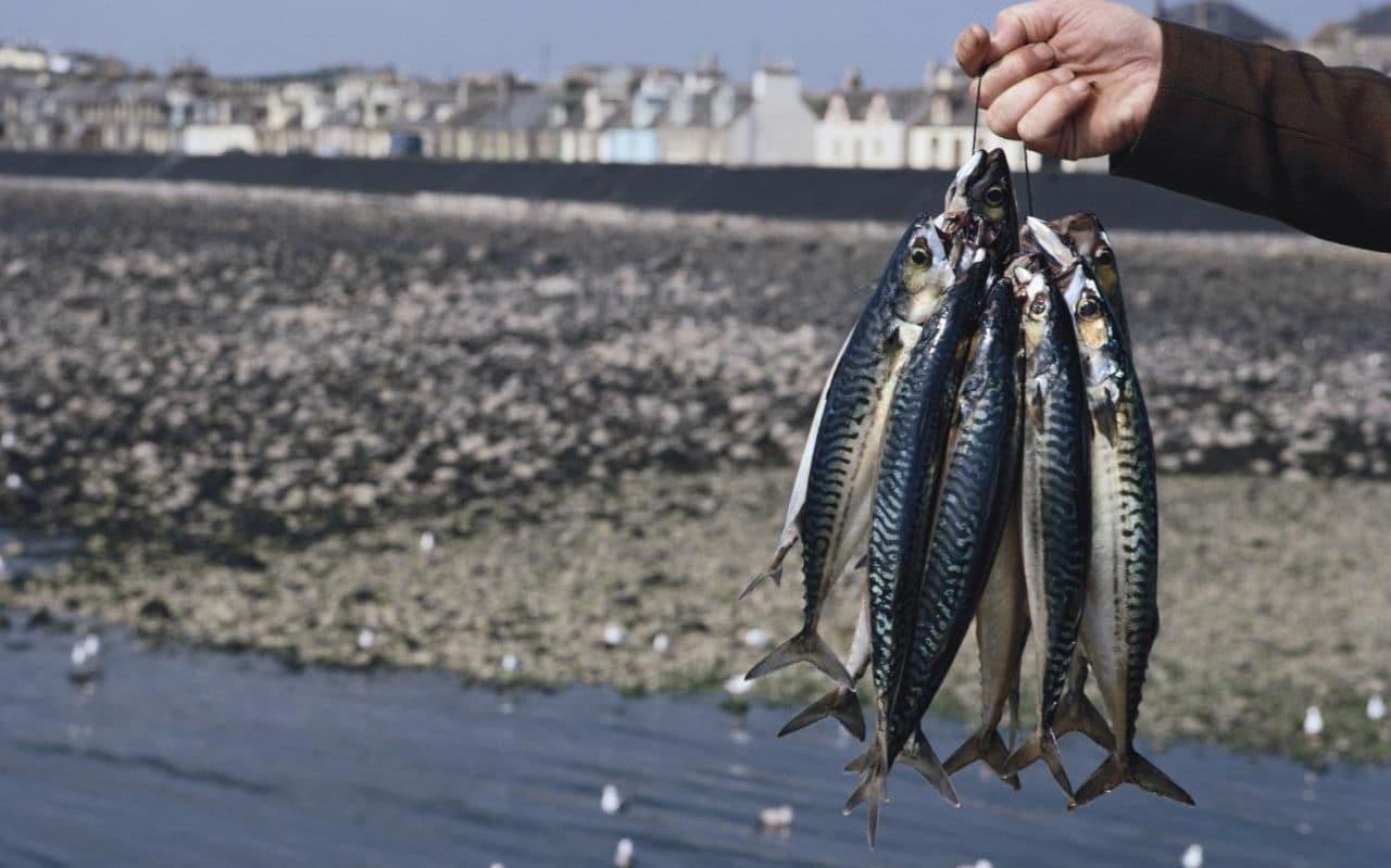 mackerel_fishing