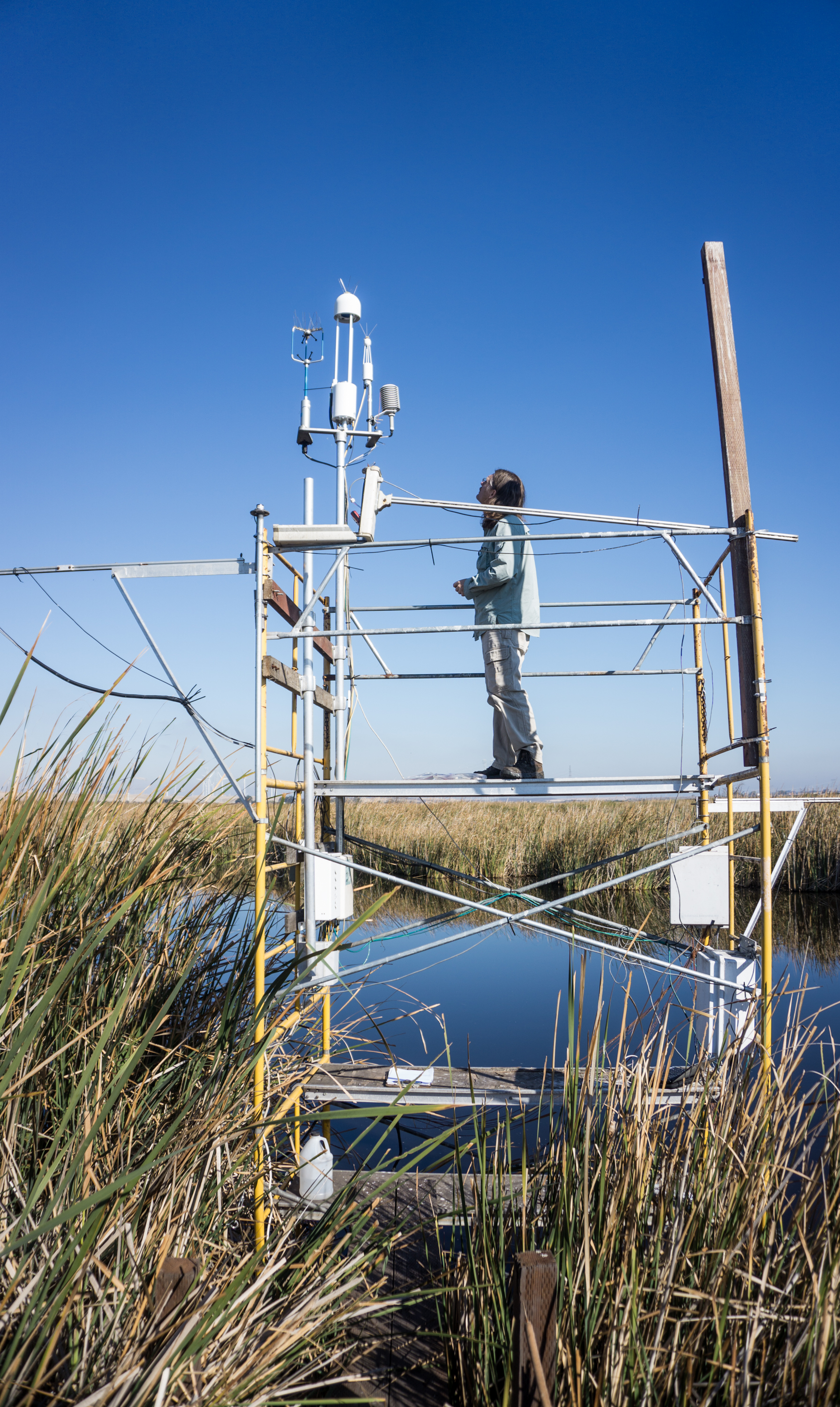 A scientific tower houses a gas analyzer, which detects greenhouse gas moving into and out of the Delta ecosystem. Credit: Kyle Hemes