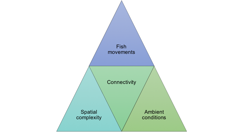 A seascape ecology perspective on studying fish movements in the estuary. Image provided by Denise Colombano.