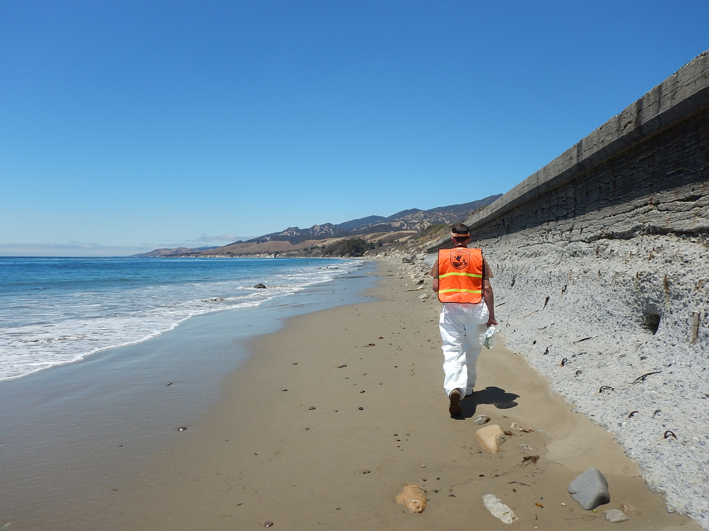 U.S. Fish and Wildlife Service biologist conducts observations along the beach to assess natural resource damages related to the Refugio oil spill.
