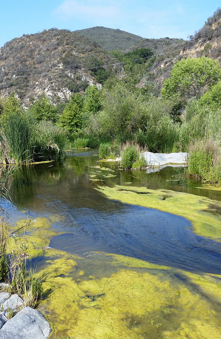 In March, the Santa Margarita River was nutrient rich and predominantly overgrown with algae. Image: Justin Vanderwal