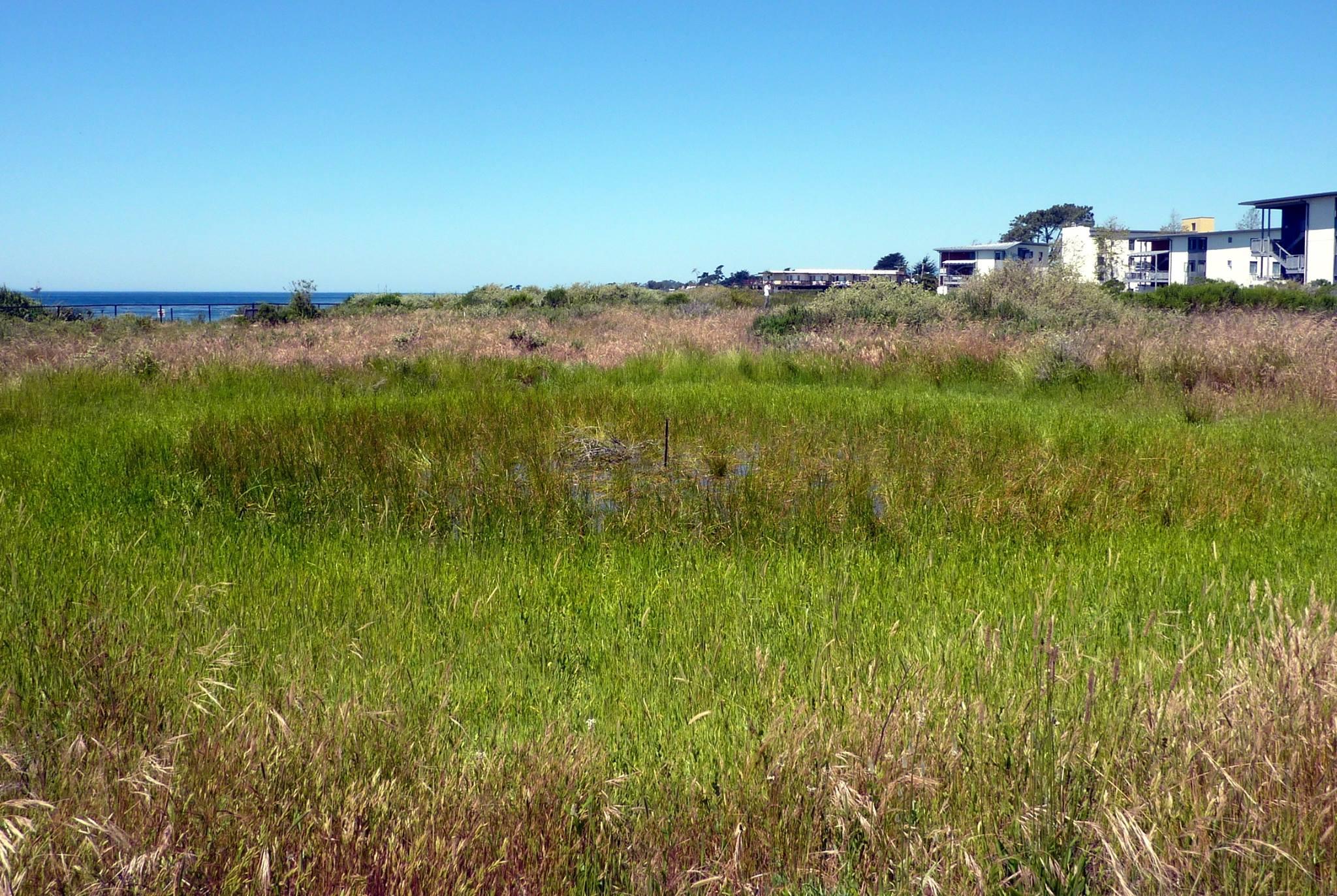 Santa Barbara wetlands. Image courtesy of Cheadle Center for Biodiversity and Ecological Restoration, UC Santa Barbara