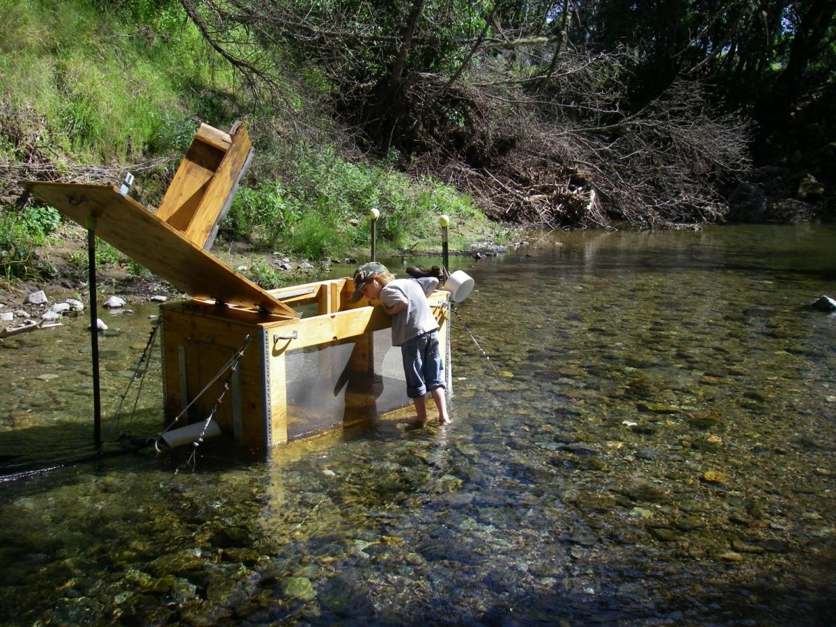 Downstream migrant smolt trap on Mill Creek