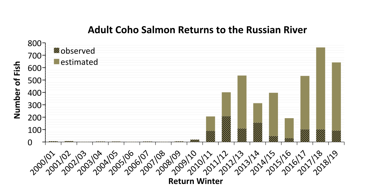 Estimated adult coho salmon returns to the Russian River over the last 20 winters. Note survey methods varied across years. Estimates were generated using PIT tag technology.