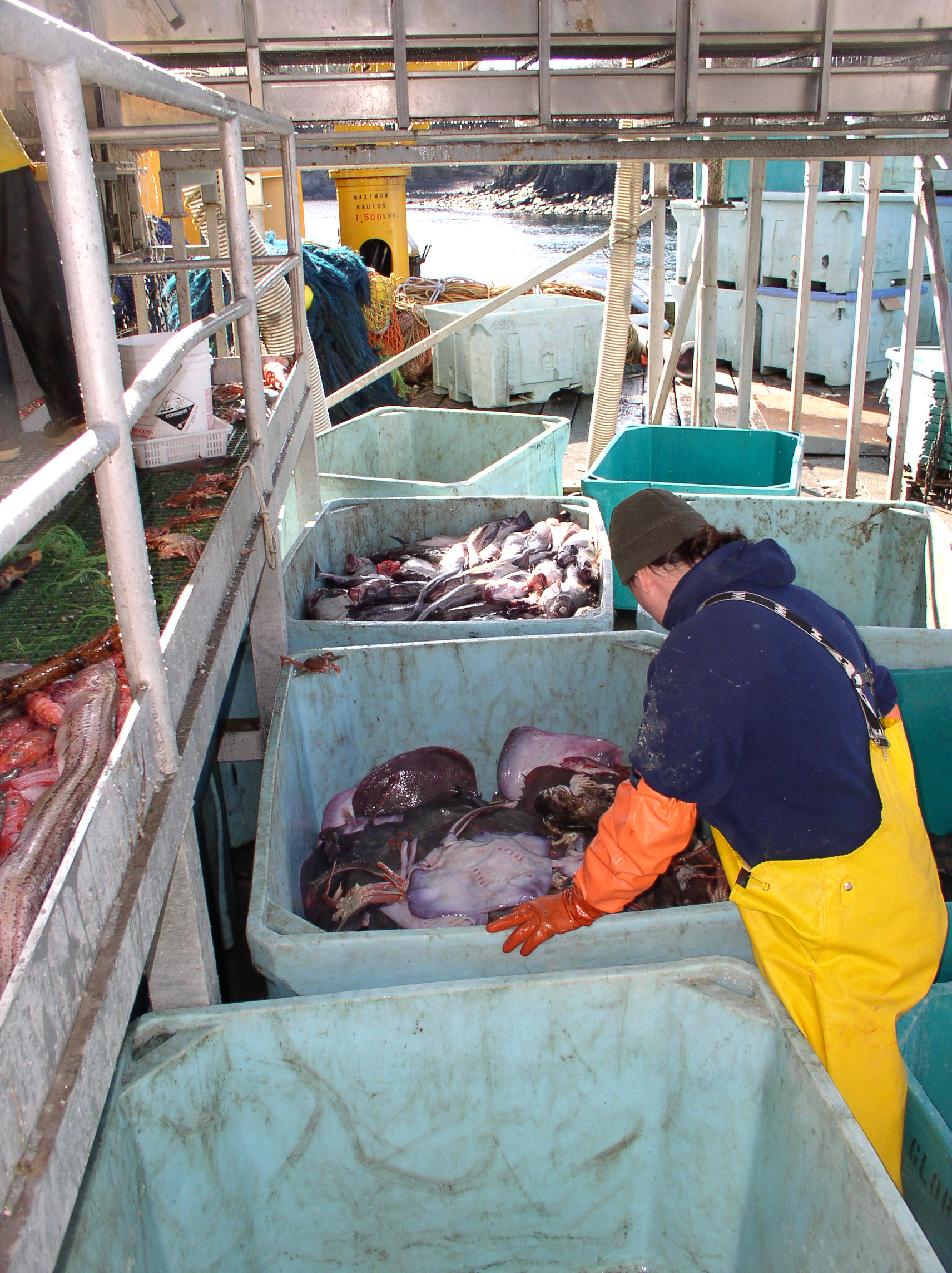 fisherman sorting out skate bycatch
