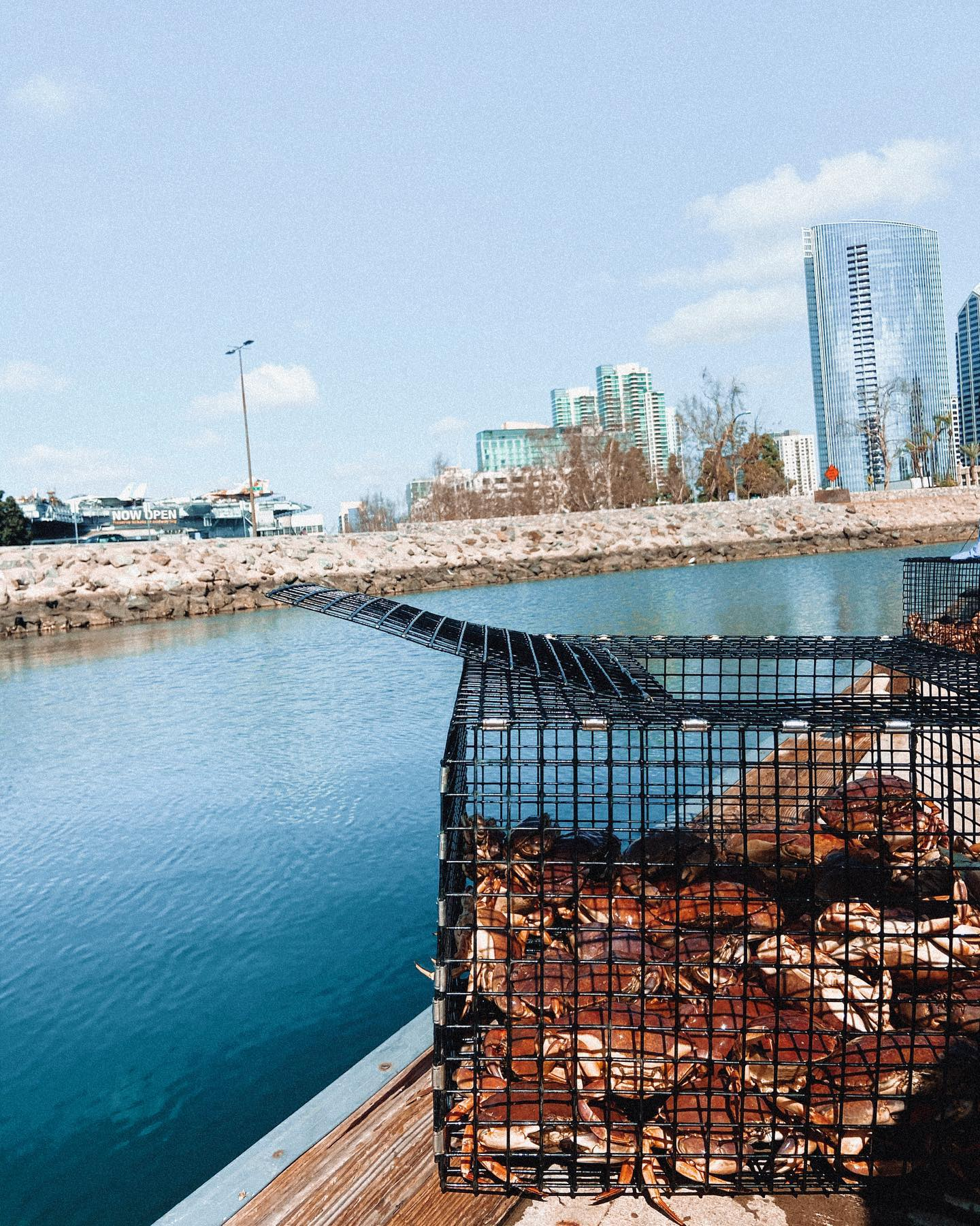 crabs in a trap, daytime city harbor in background