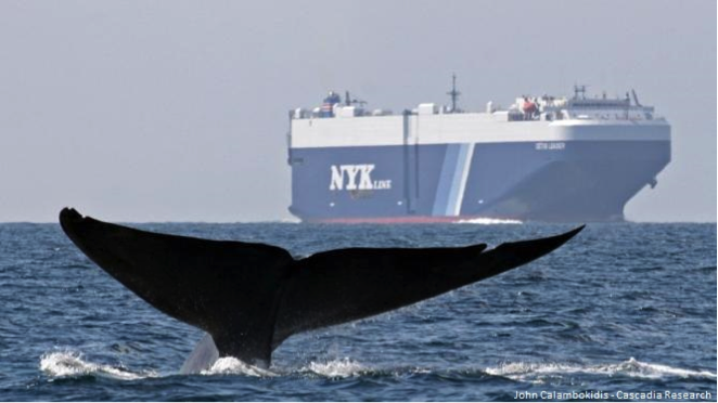 The region around Channel Islands National Marine Sanctuary is heavily transited by large commercial vessels traveling into and out of the ports of Long Beach and Los Angeles.