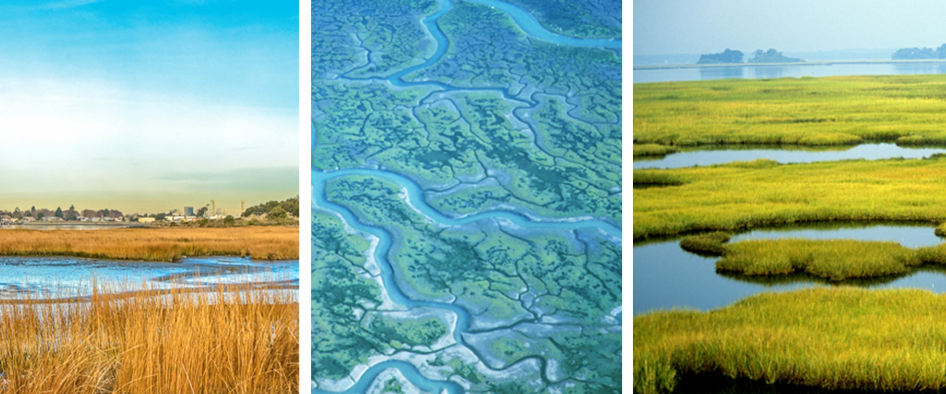 wetlands of various types in california