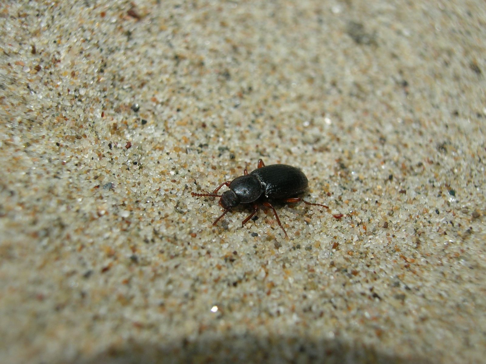 Beetles. Credit: Dave Hubbard