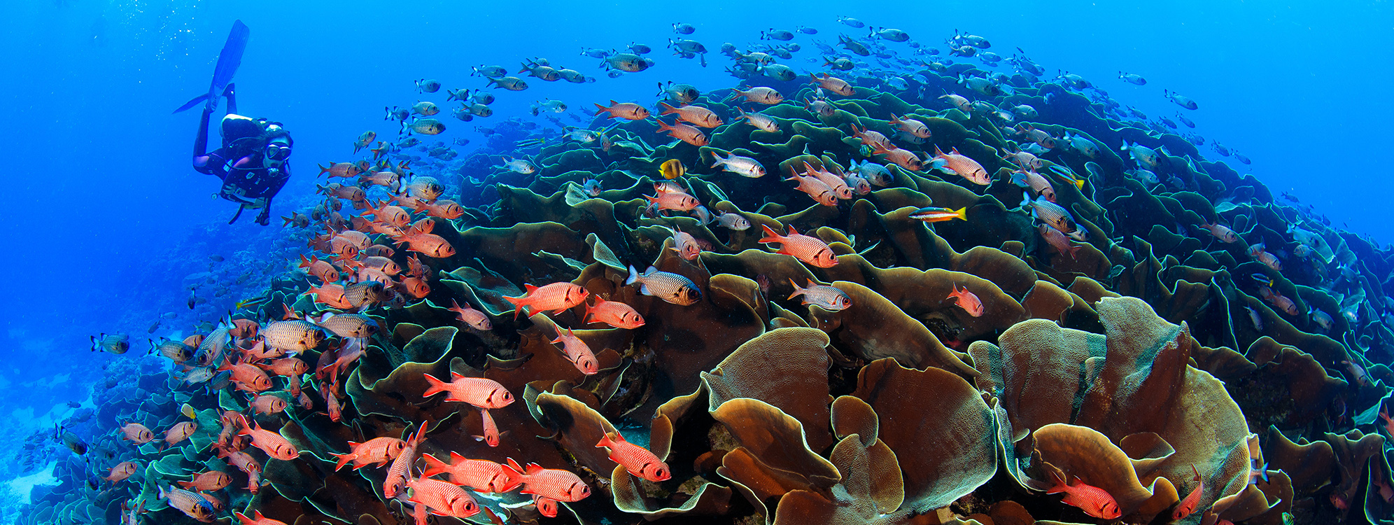 Scuba diver swimming with a colorful school of fish around coral.