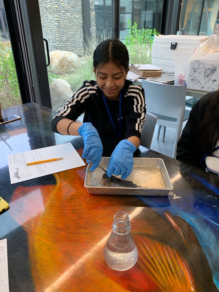 student dissects fish