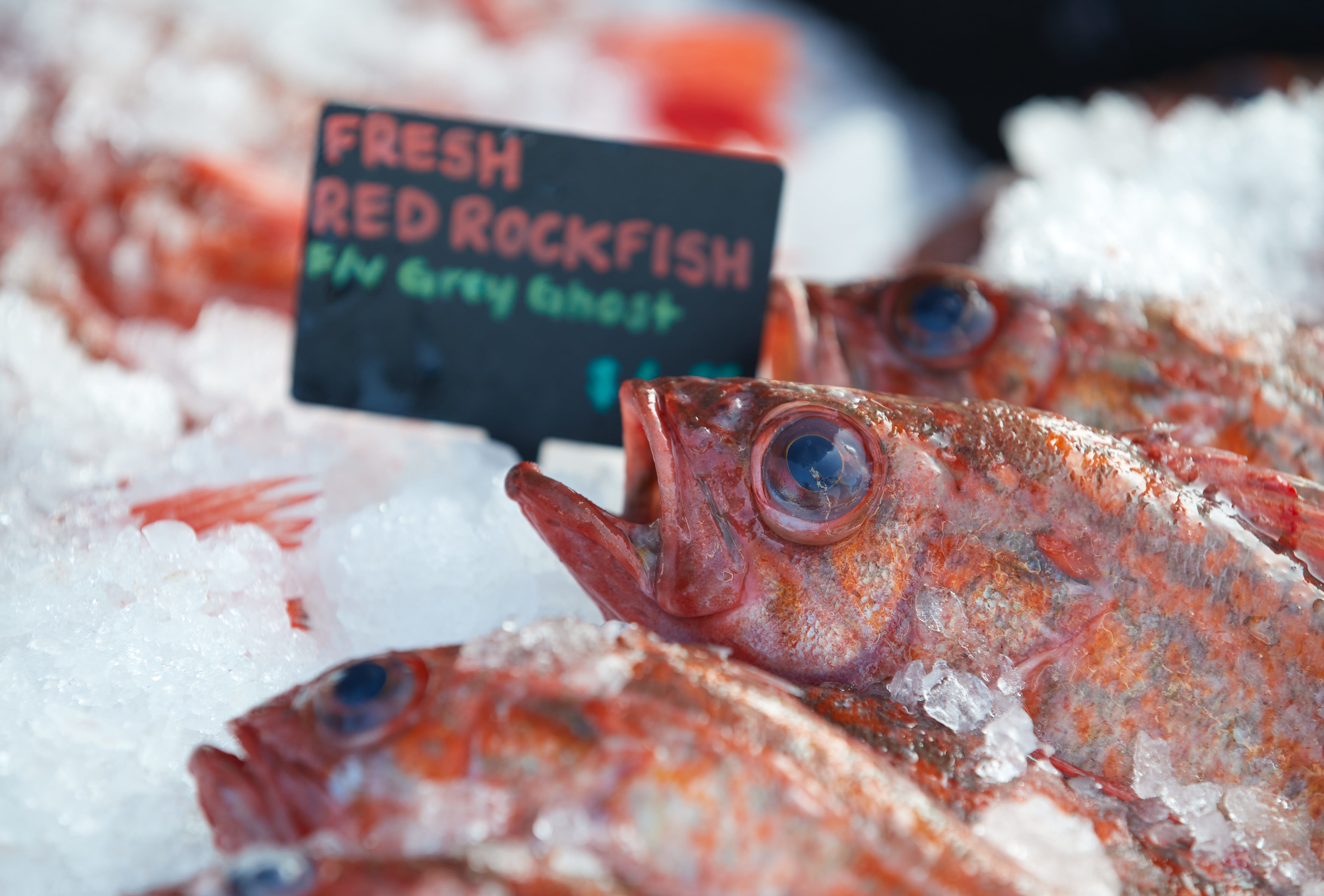 rockfish on ice for sale local seafood