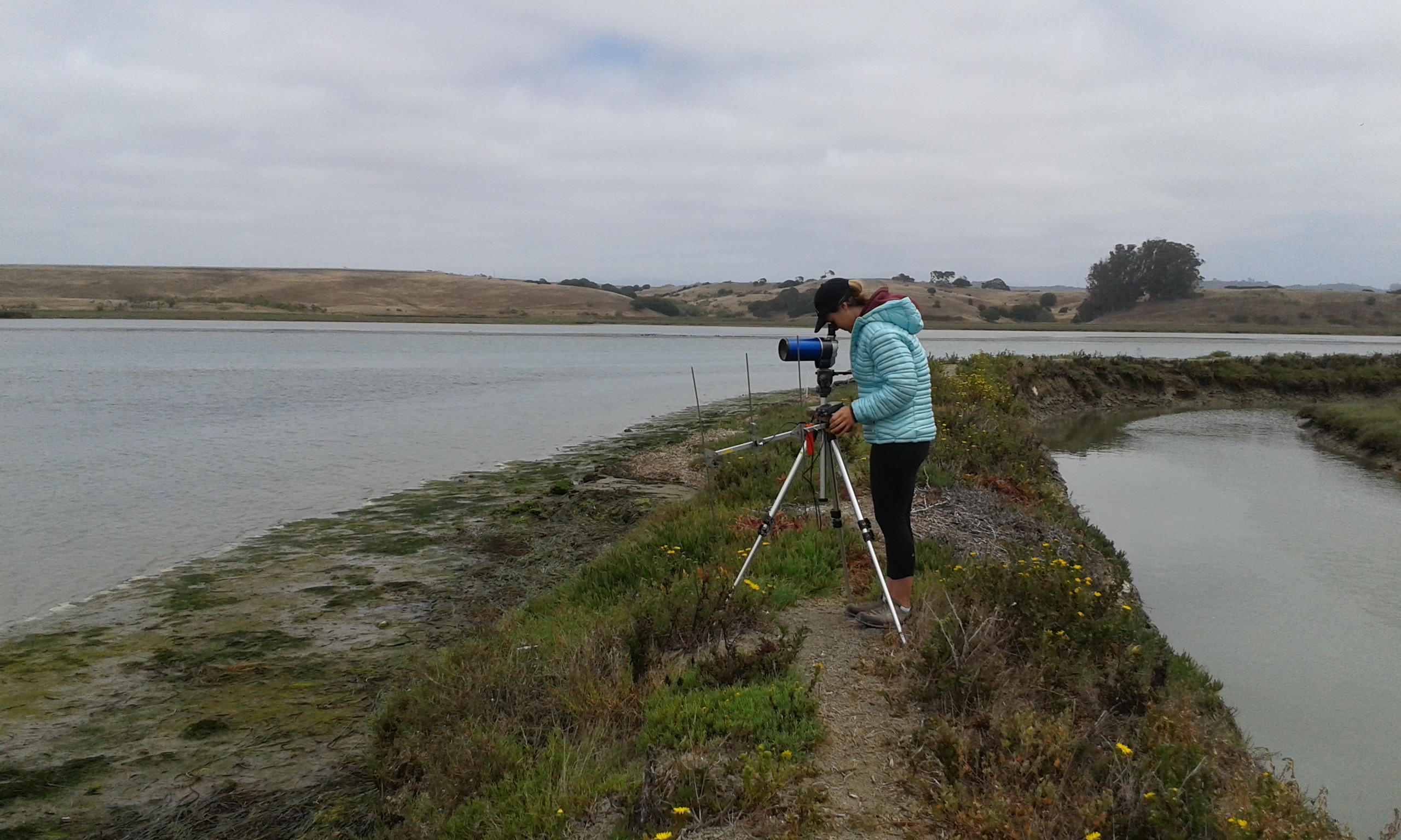 State Fellow Tracy Grimes tracking sea otters (Enhydra lutris) using radio telemetry in Elkhorn Slough, CA during her master's thesis