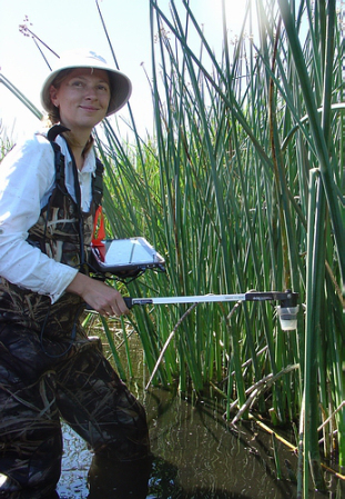 Iryna Dronova takes photos of freshwater marsh plants on Sherman Island to help her calculate vegetative cover and light penetration. Credit: Berkeley