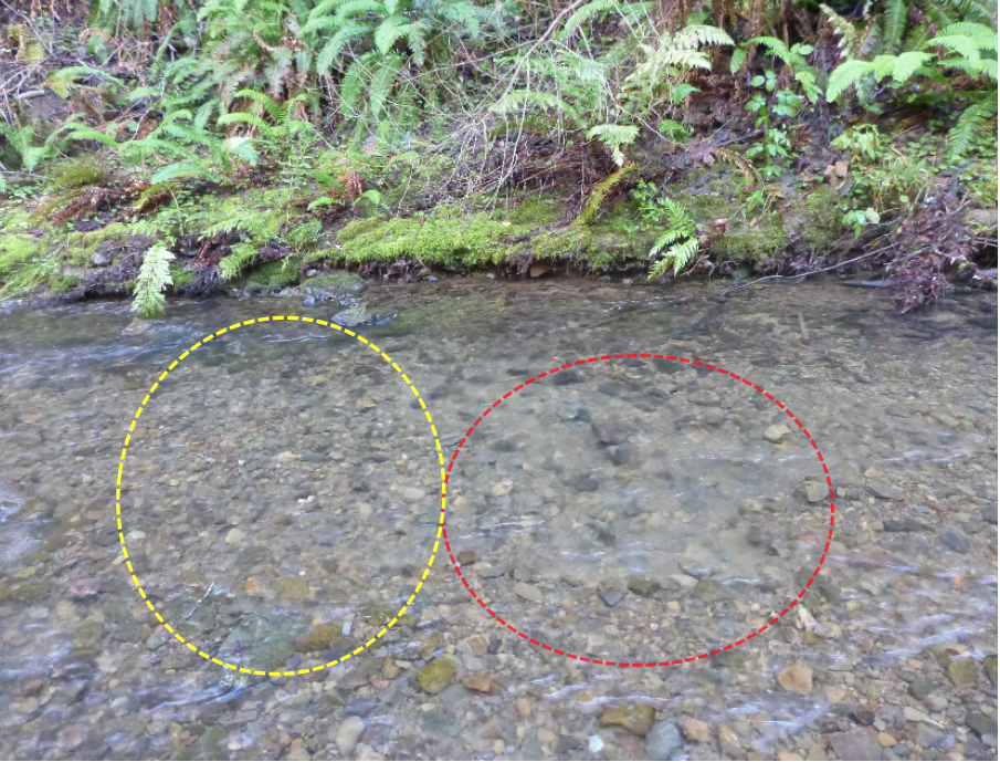 Coho salmon redd.  The river is flowing from right to left. The pot is highlighted in red and the tailspill is highlighted in yellow.