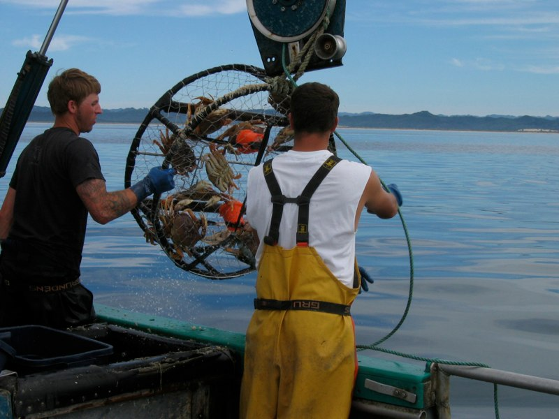 North Coast fishermen reel up a crab pot with Dungeness crab. Credit: CFR West